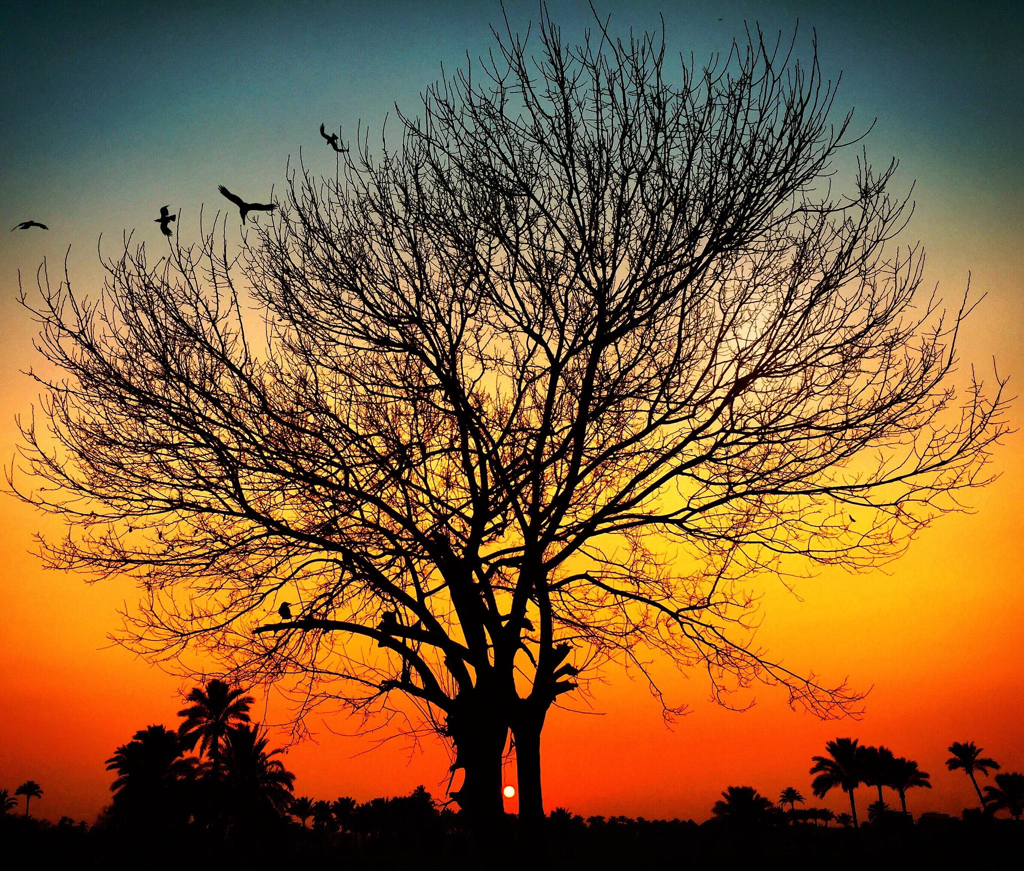 Sun in the middle of the tree by Abdullah Kamel
