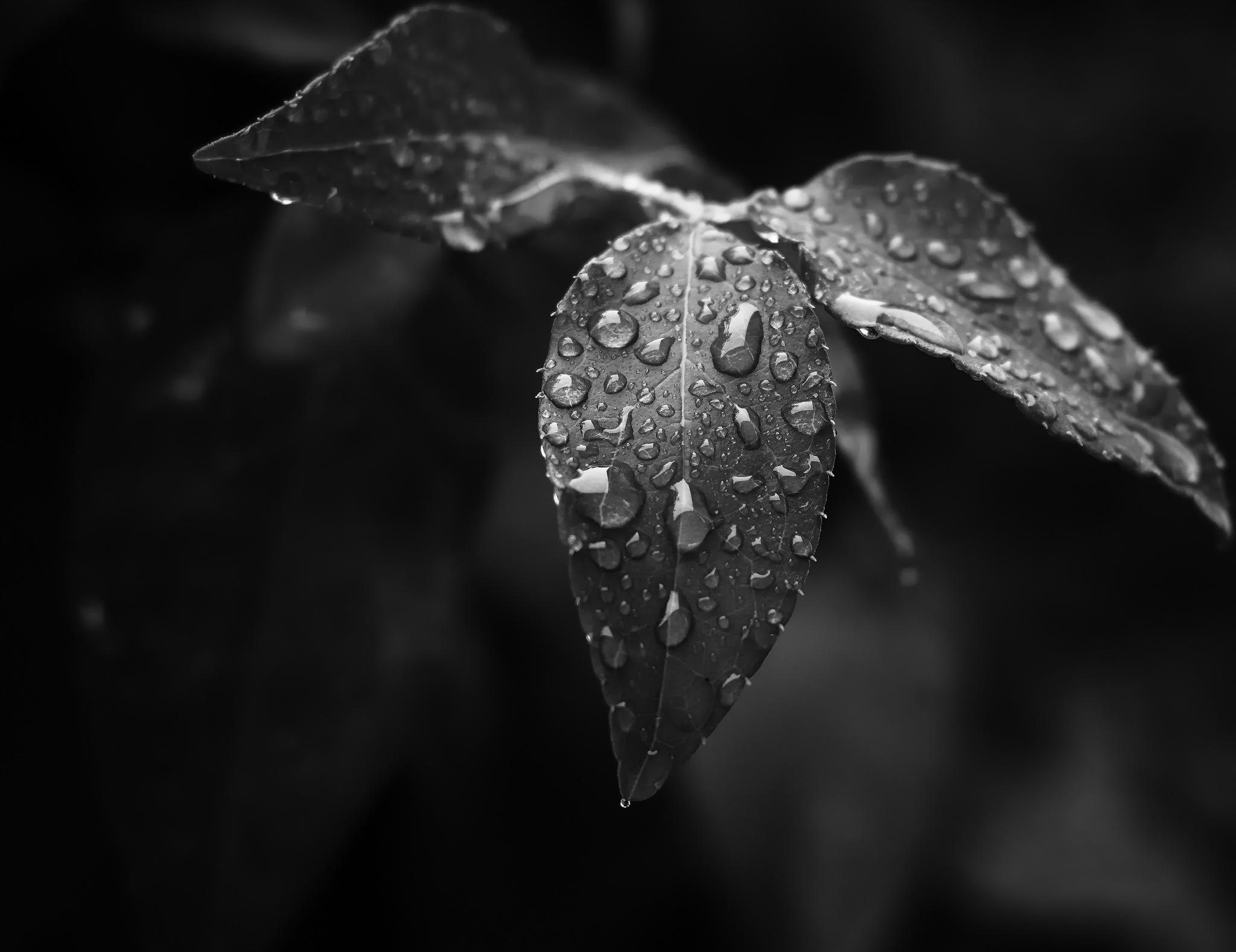 droplets  by Patrick Illhardt