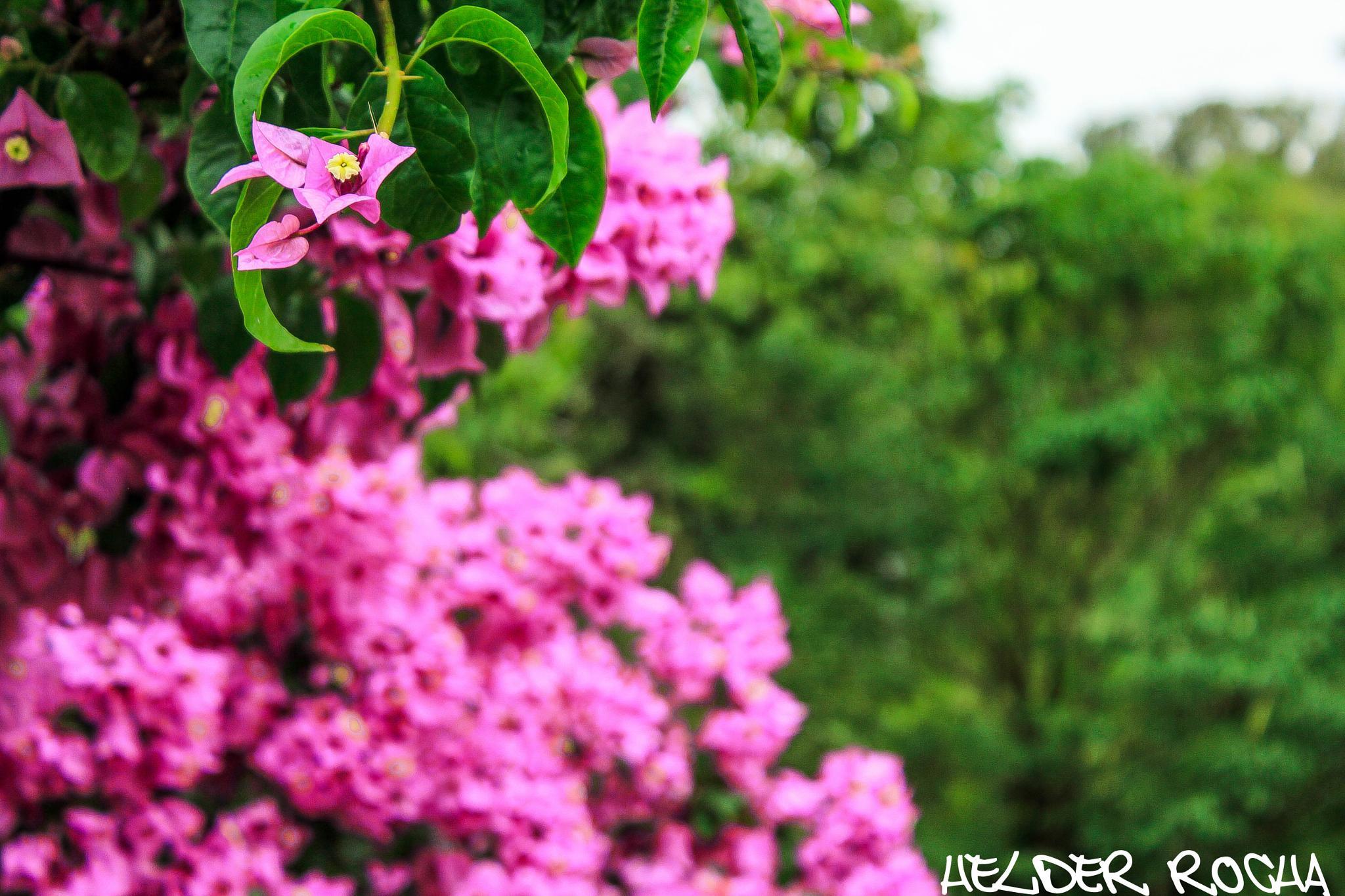 Flowers in the Babylon - Pt. 2 by HelderRocha