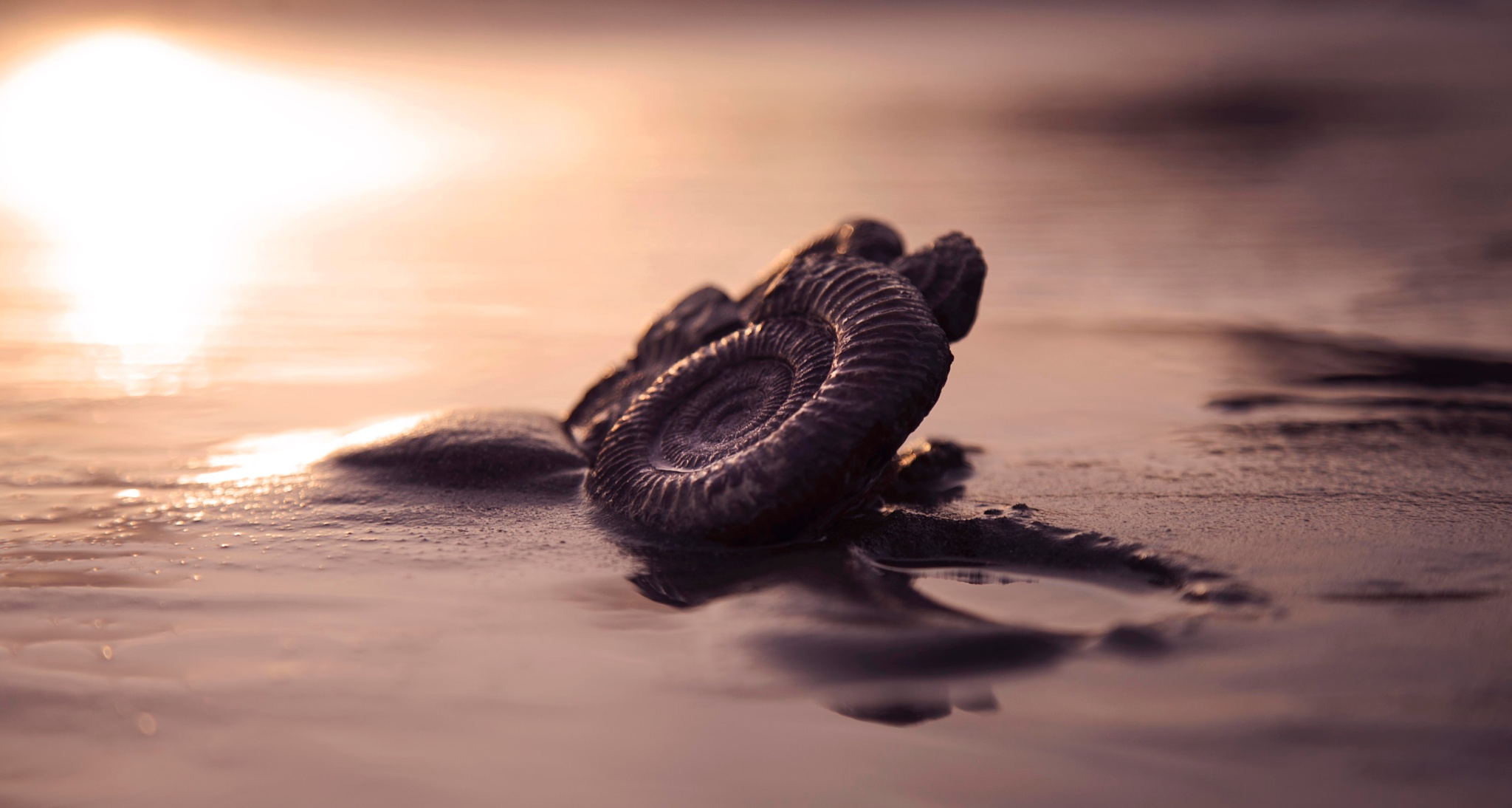 Photo in Sea and Sand #fossil #sunset #lowtide #reflections #jurassic