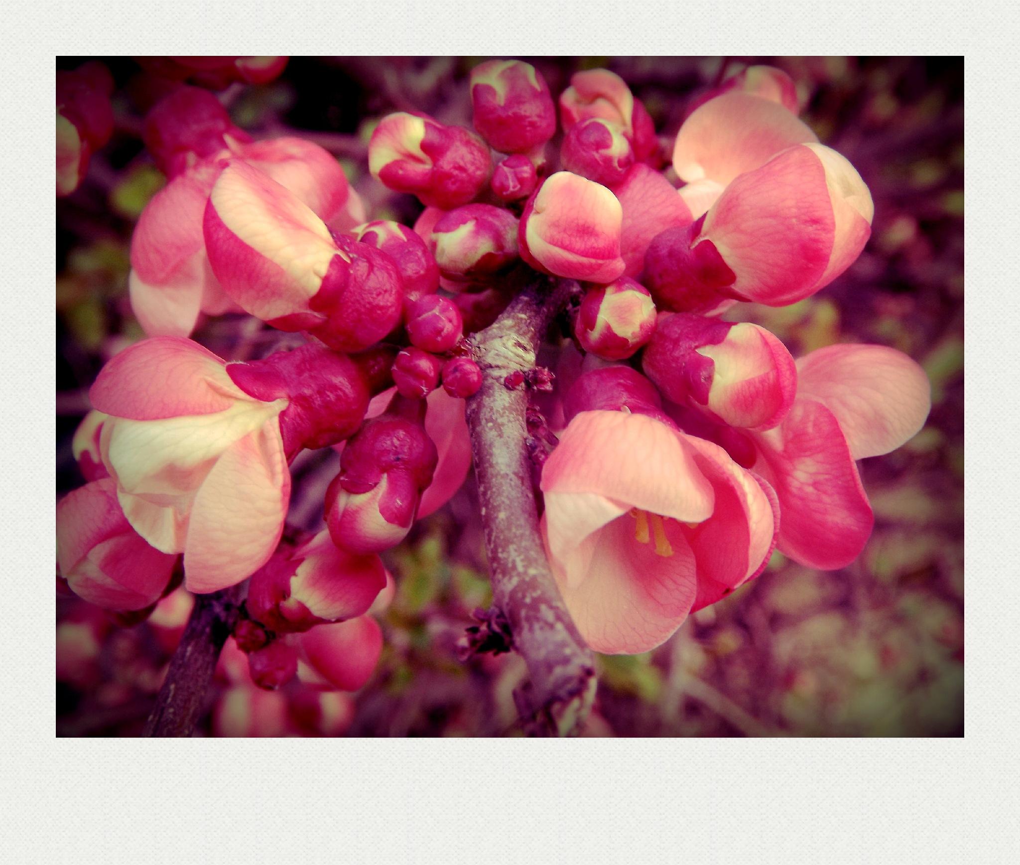 pretty pink flowers by TillyScarrott