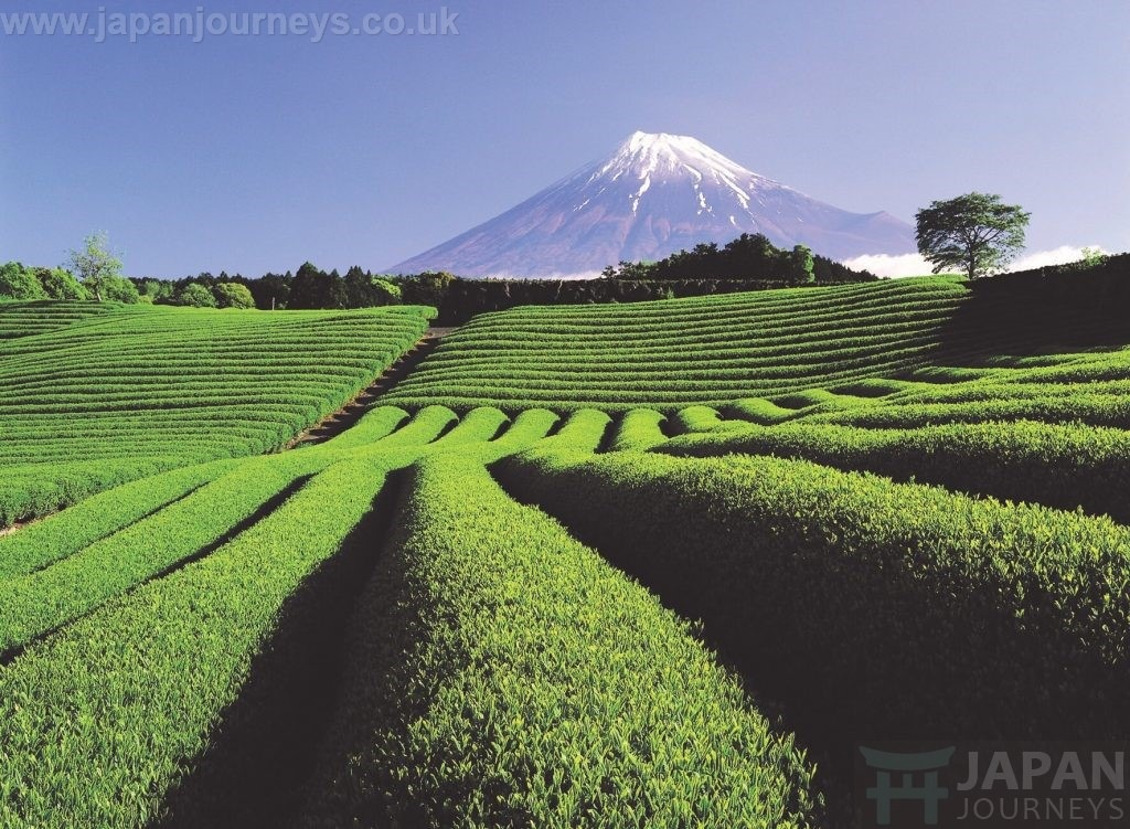 Start you Japanese Holiday with Japan Journeys Today!  by jamesgreenfield