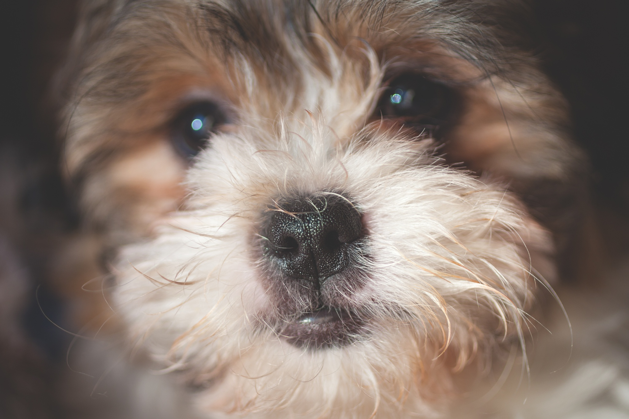 My new Furbaby by dianeholmanphotography