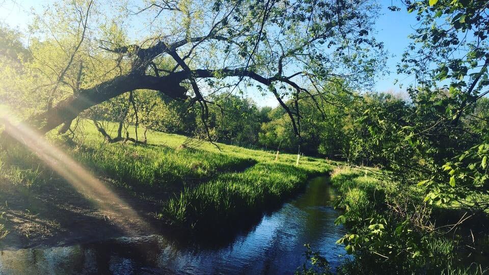Nature, Woods by Mariah Sample