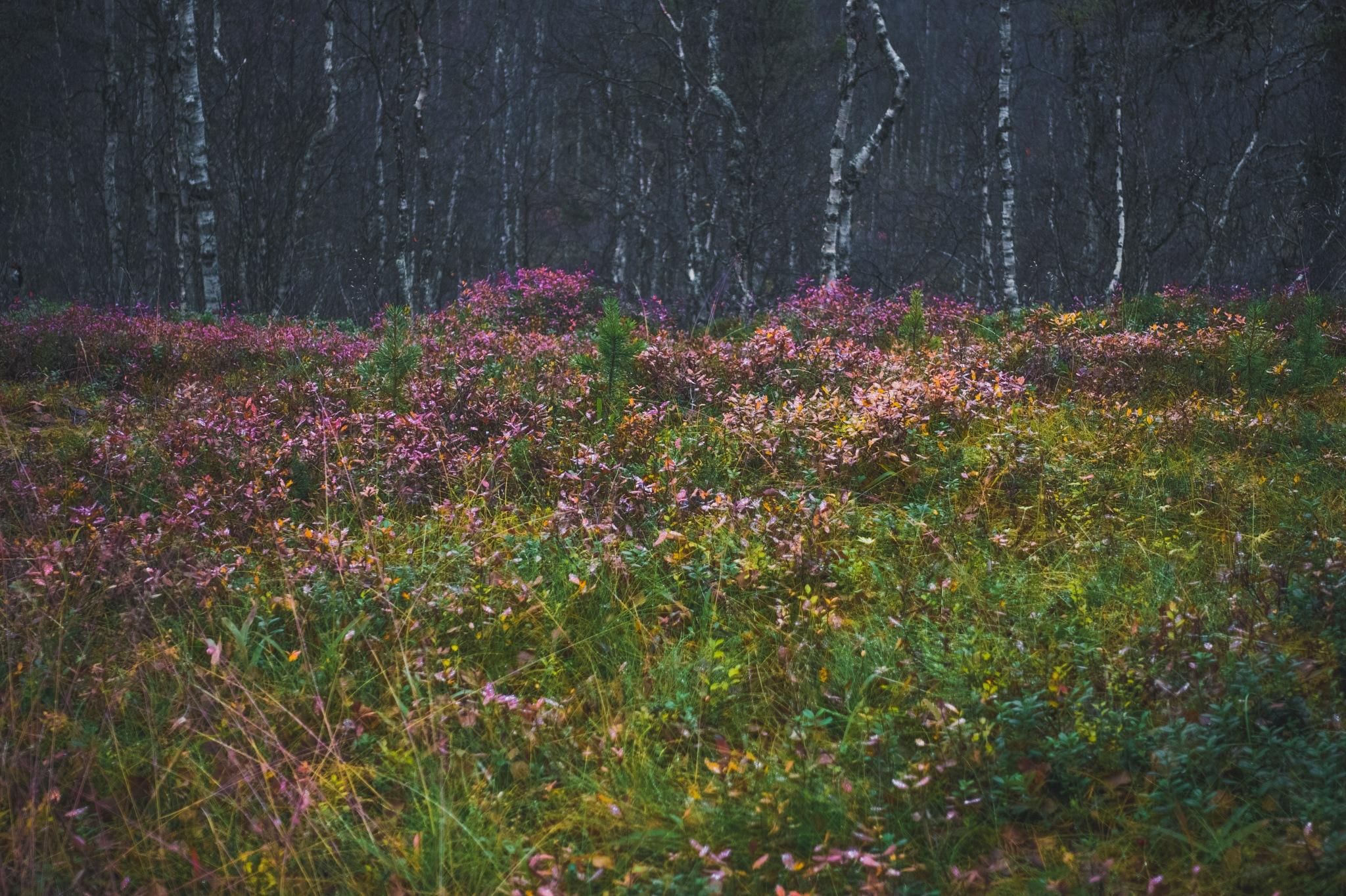 Autumn Woods I by Juuso Voutilainen