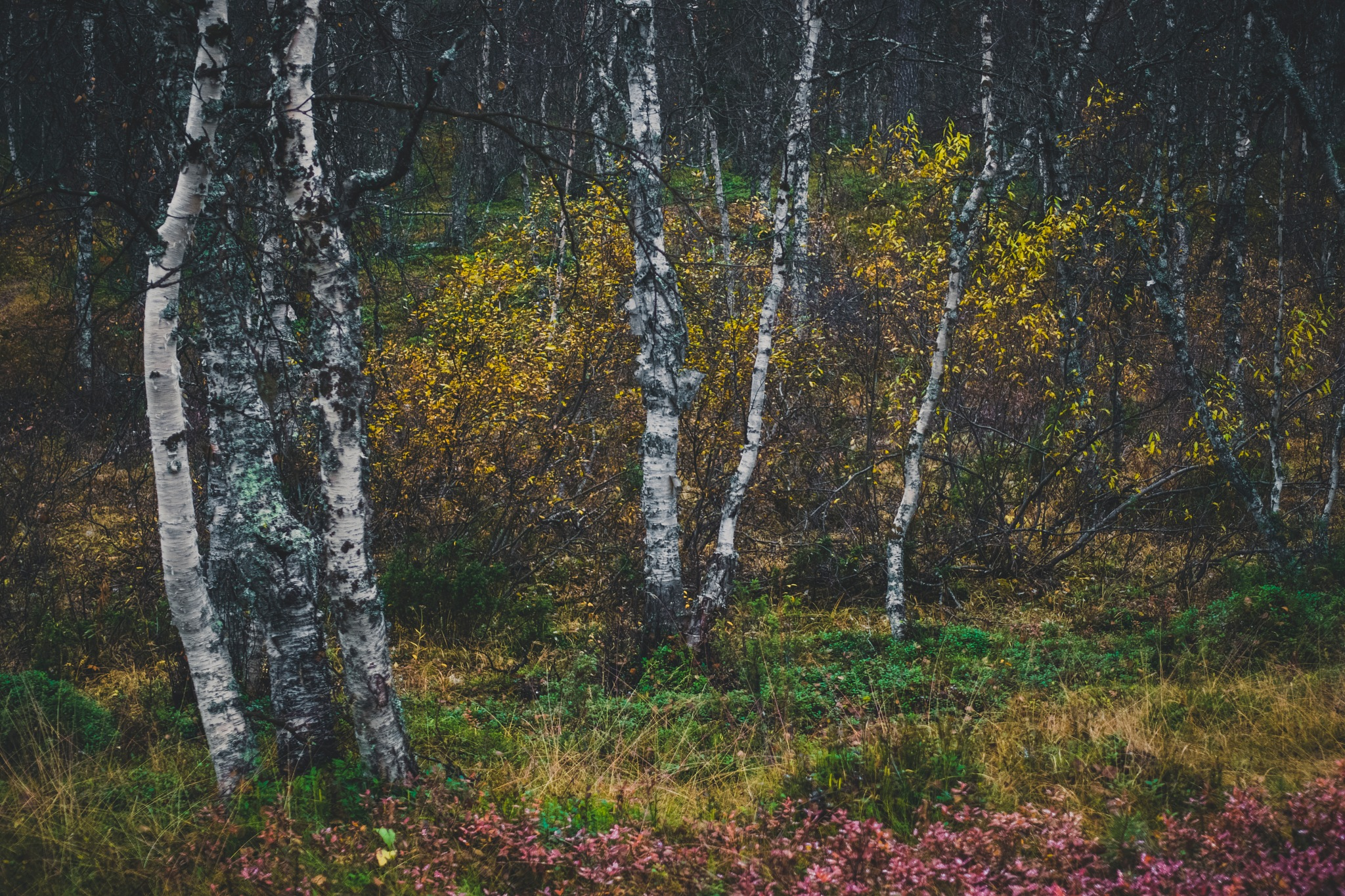 Autumn Woods II by Juuso Voutilainen