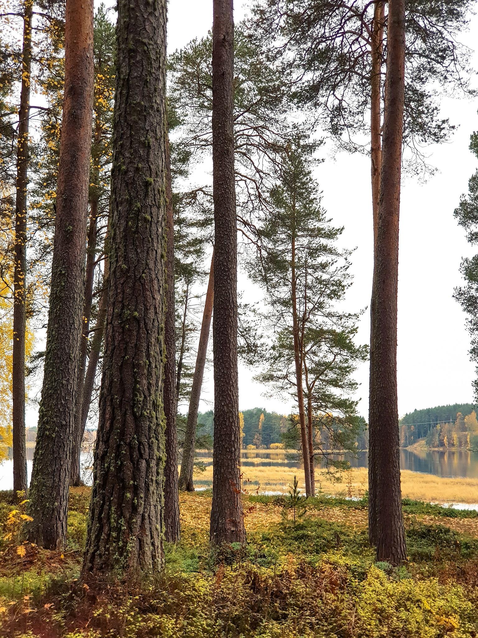 Autumn Woods 4 by Juuso Voutilainen