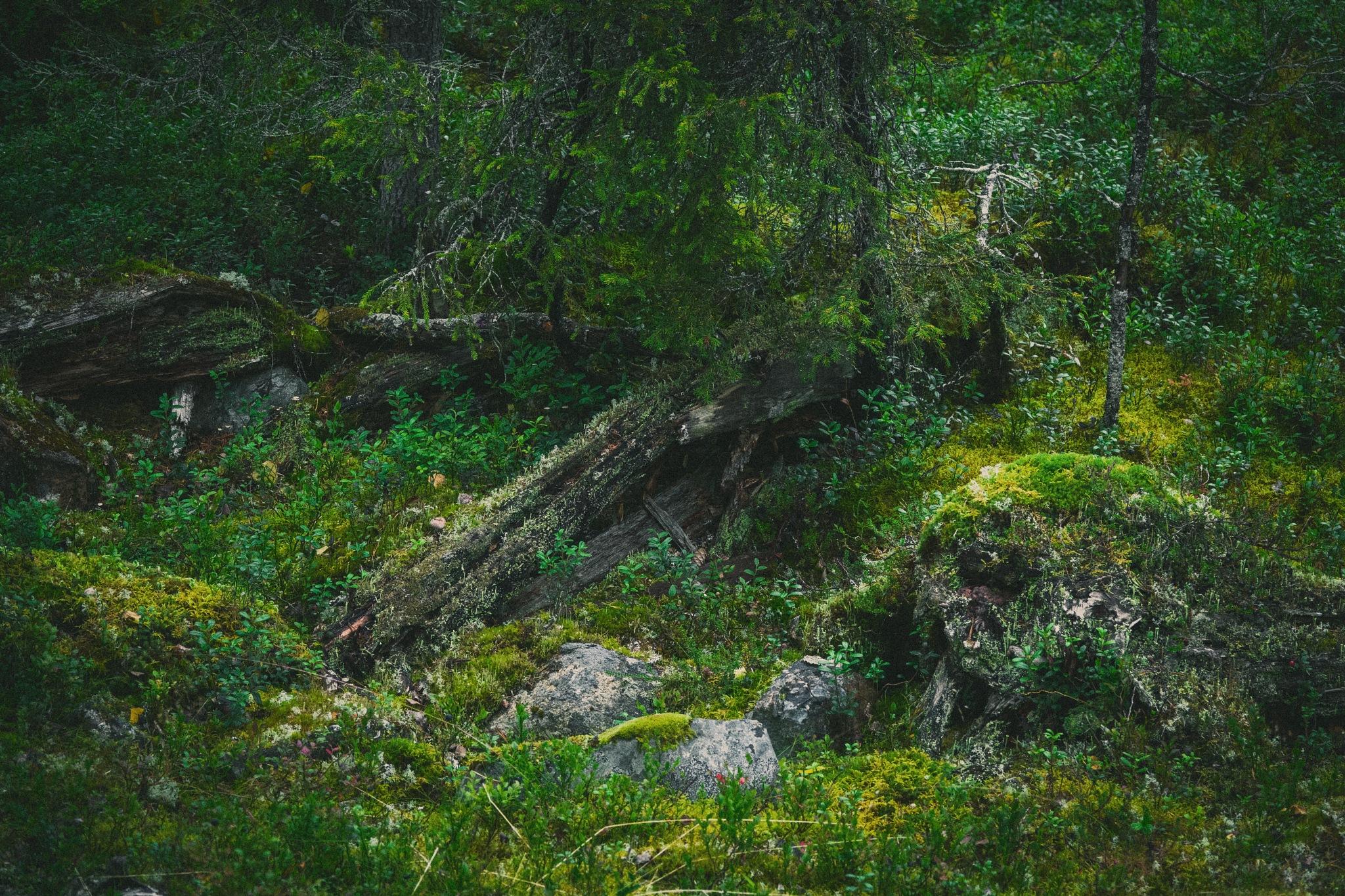 Biome by Juuso Voutilainen