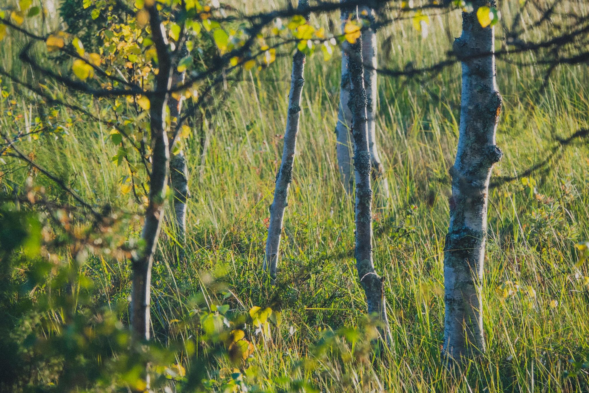 Fall Evening Light by Juuso Voutilainen