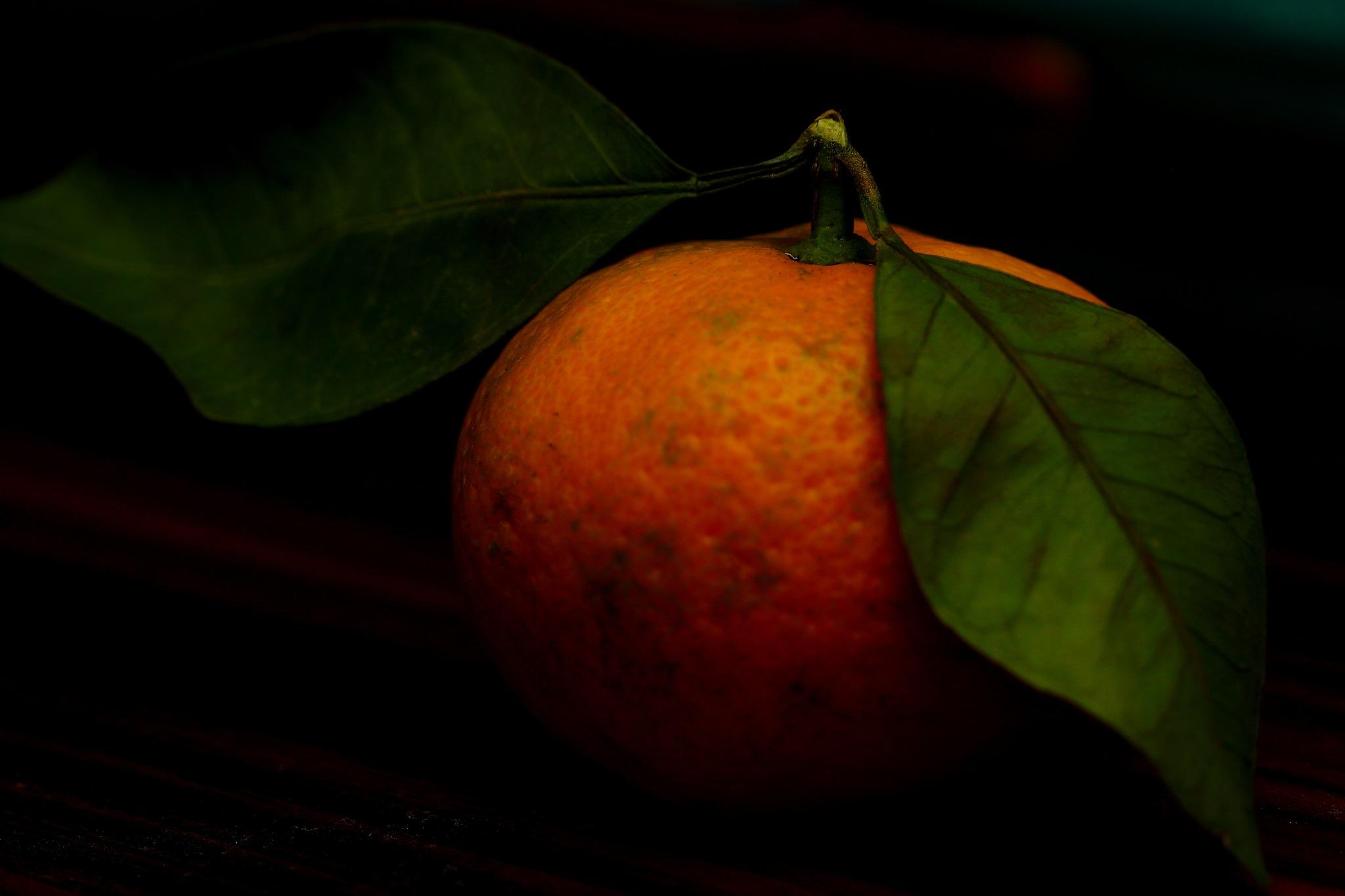 mandarin by Halil AKAY