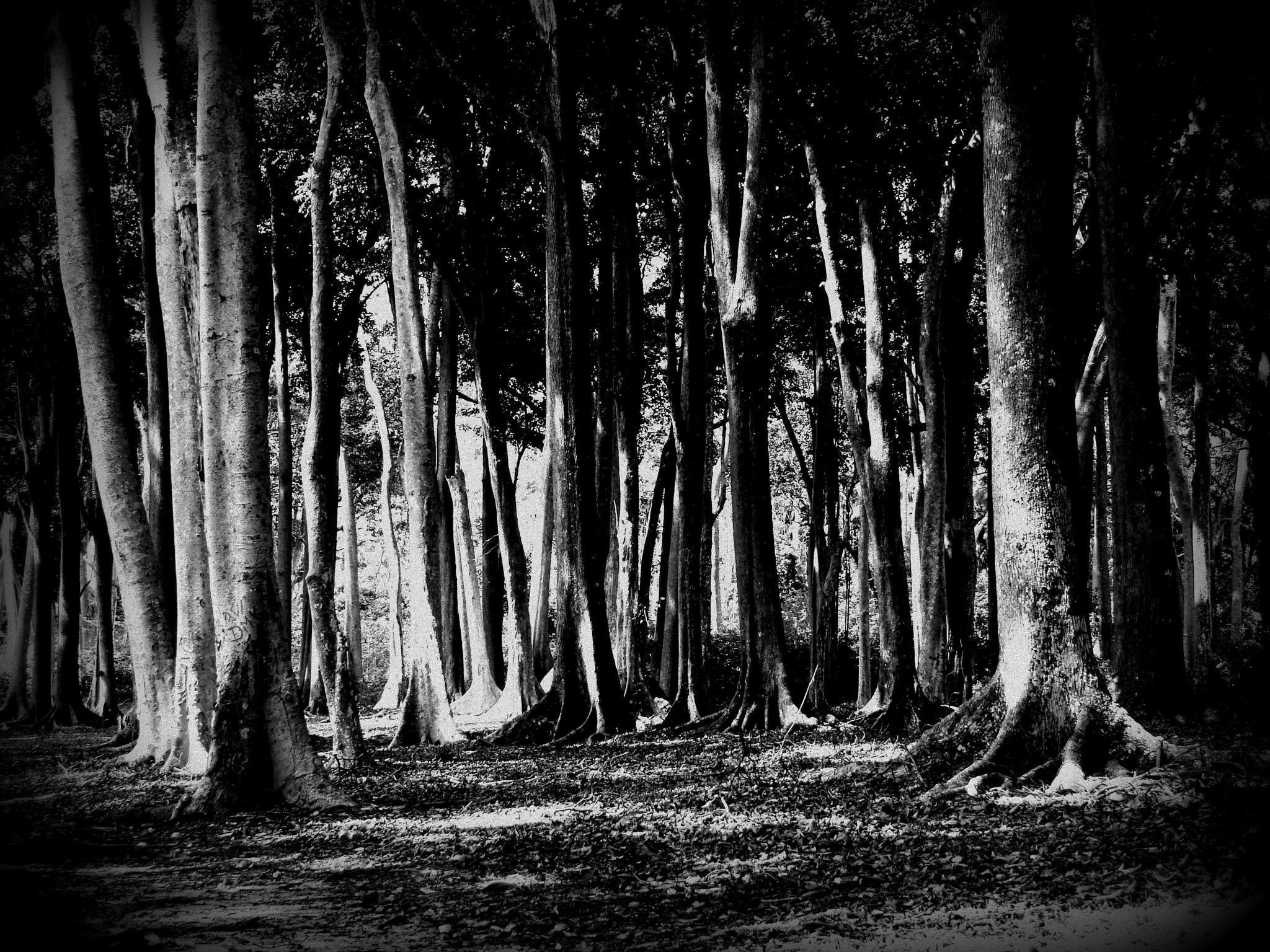 Untitled by UjwalaDahake
