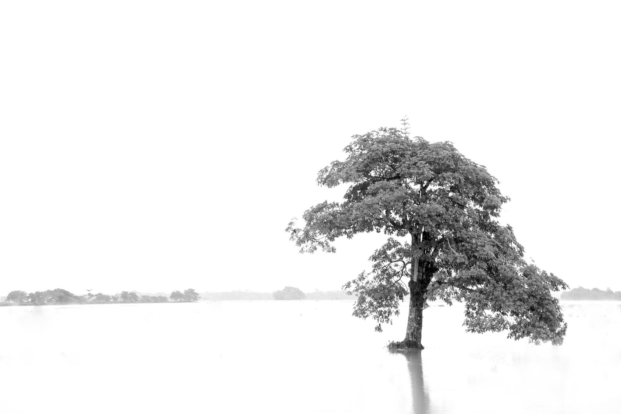 tree  by Jobs Arinda