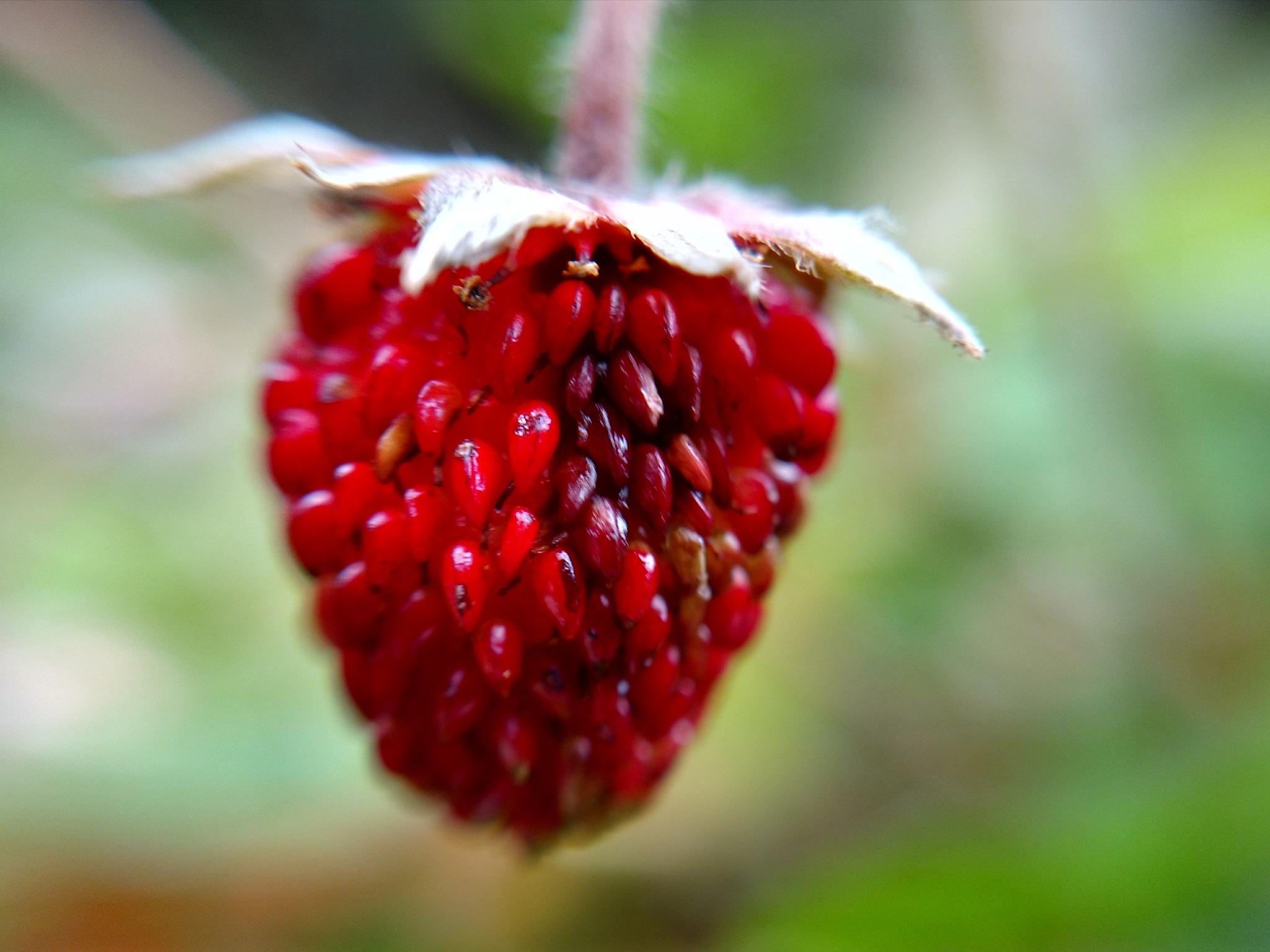 Strawberry by Catita Patino