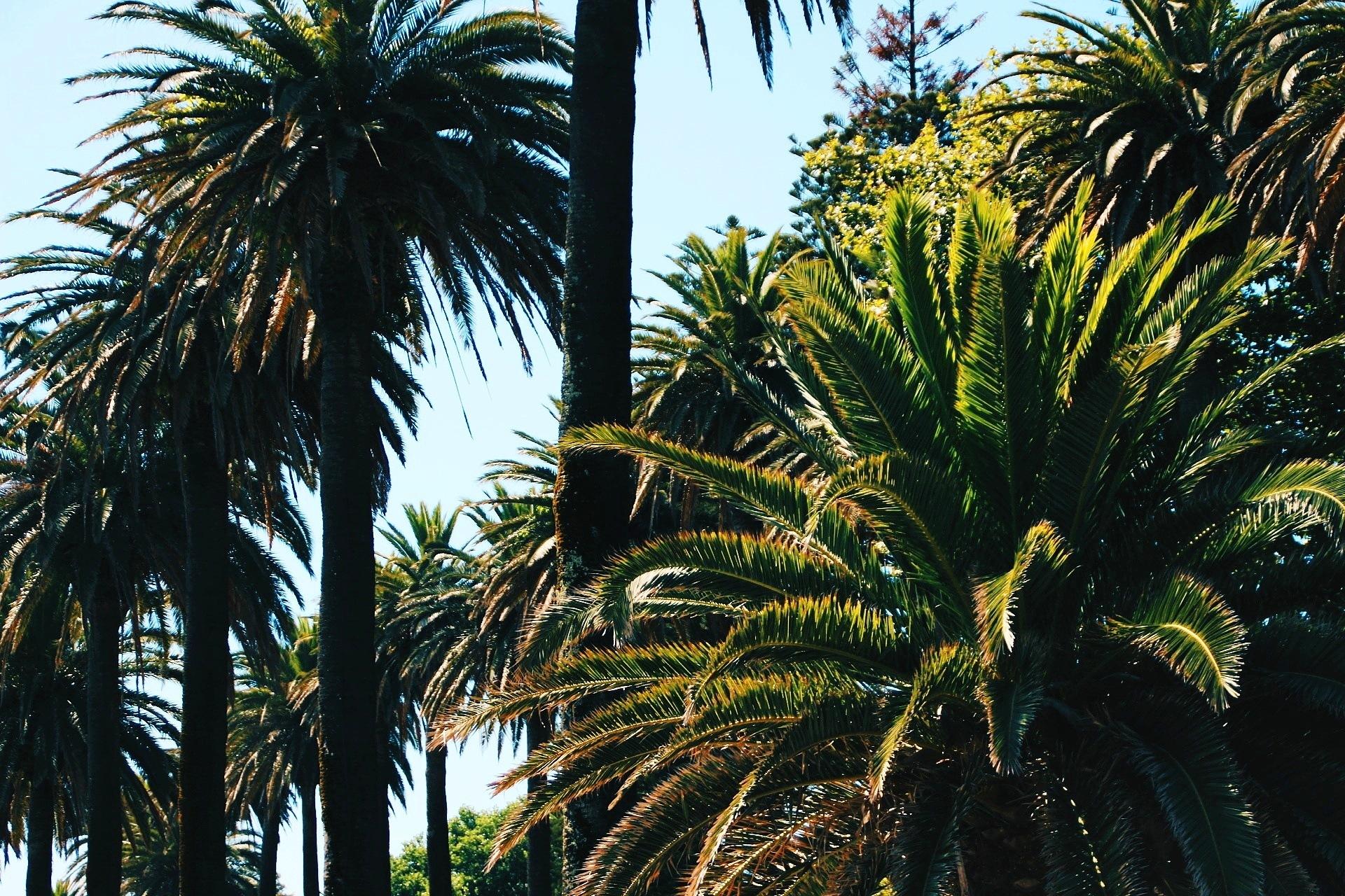 Palmtrees! by tessaklok