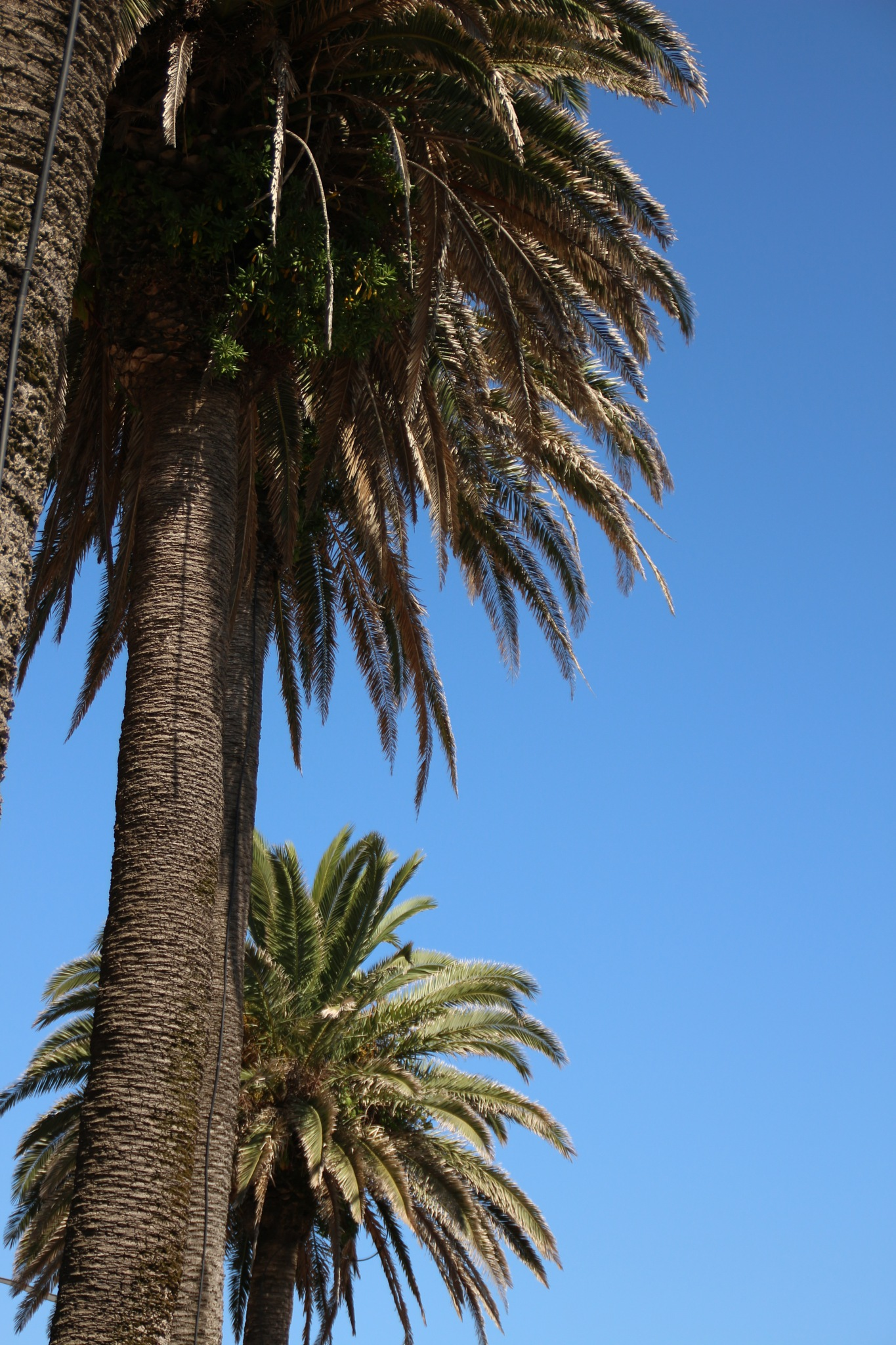 Palm trees by tessaklok