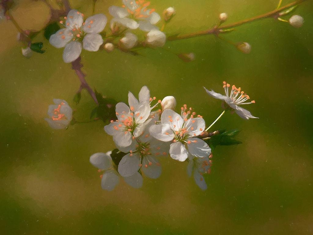 artistic blossom by Diwan