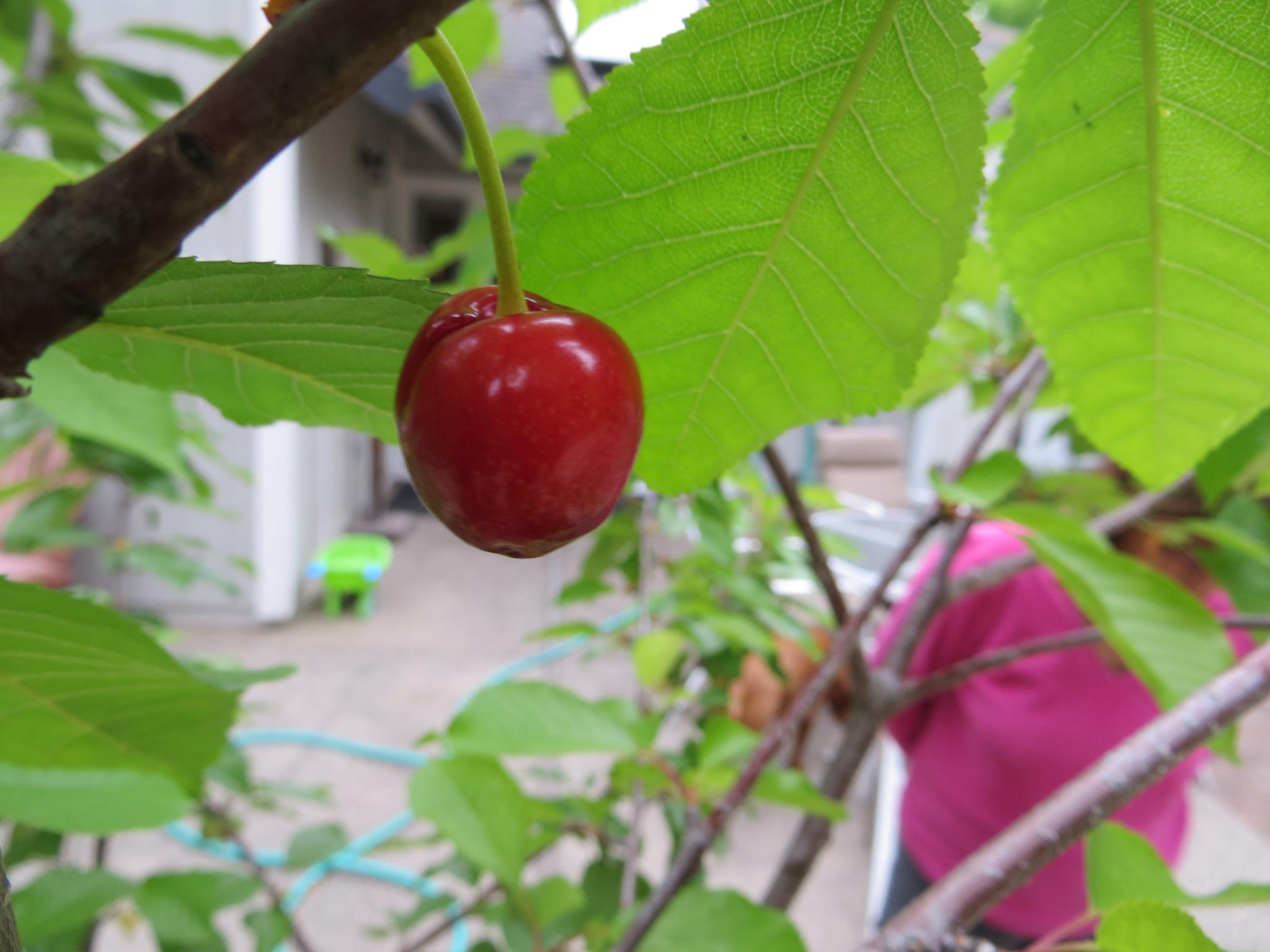 Cherry by Kris Martinson