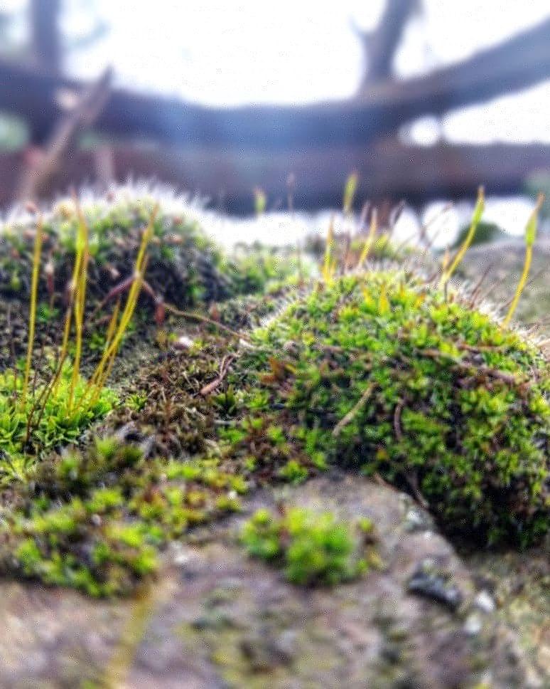 Green plant nature by Vanyakozan