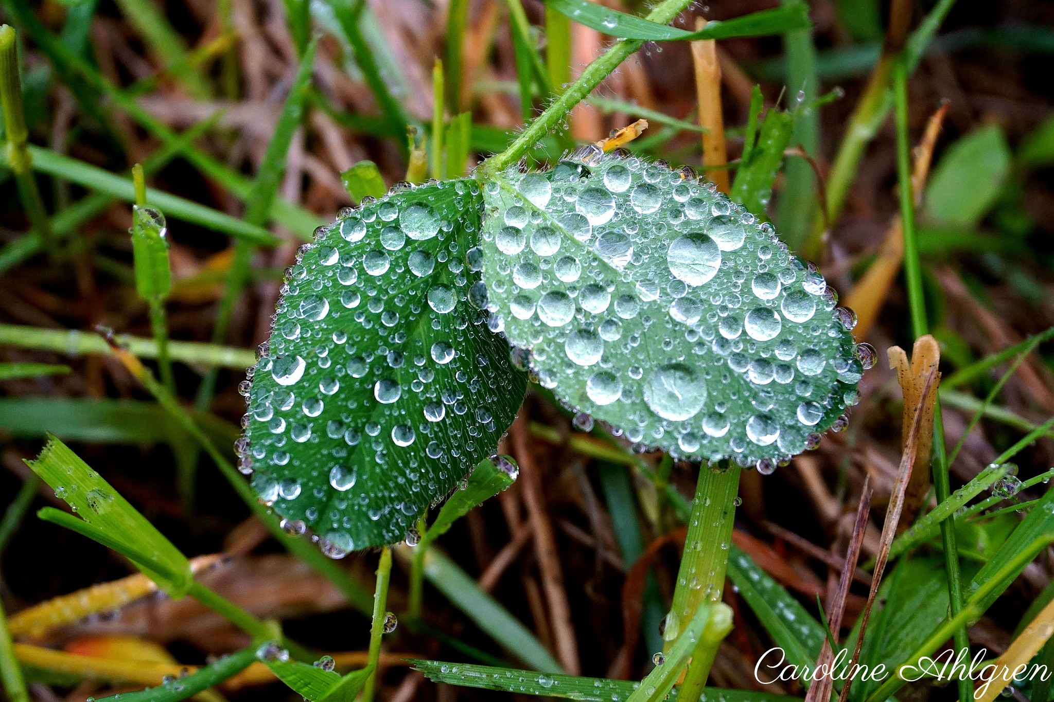 Raindrops can turn into a waterfall by Caroline Ahlgren
