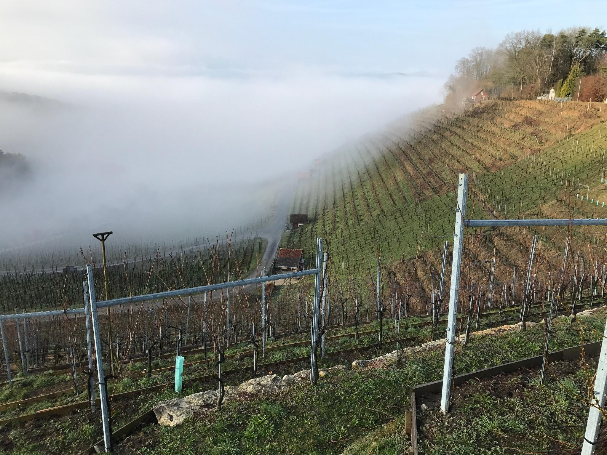 Vineyard Birmenstorf WGB by Eriberto
