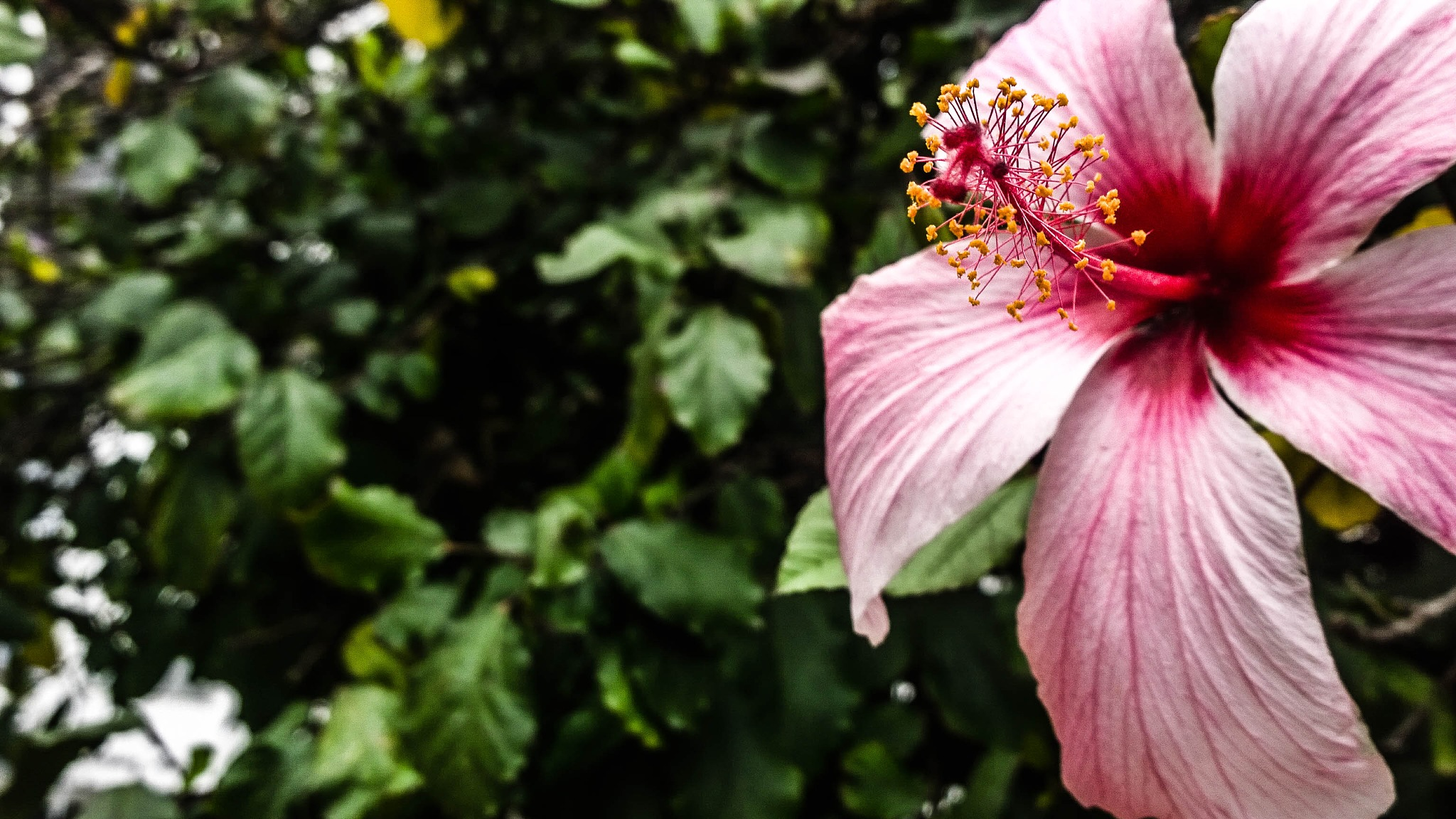 good day for flowers by Bako Baki