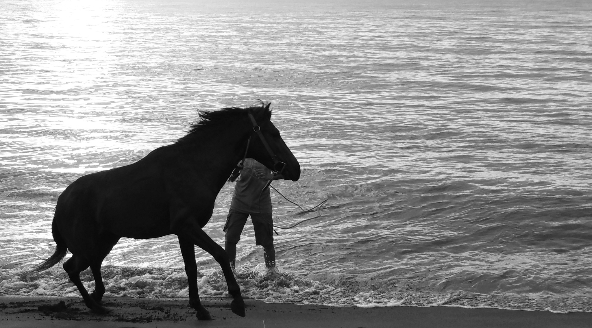 Play with a Horse by El Mamiq