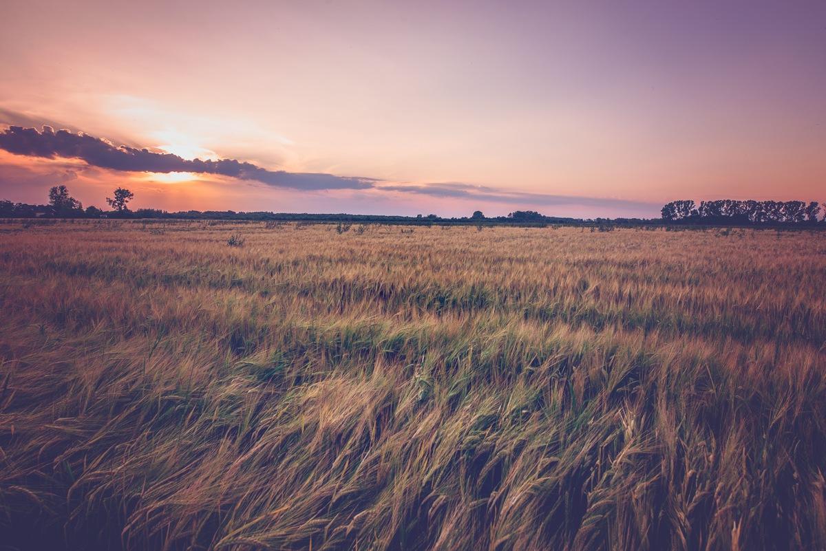 Country sunset by Agnieszka Dawid