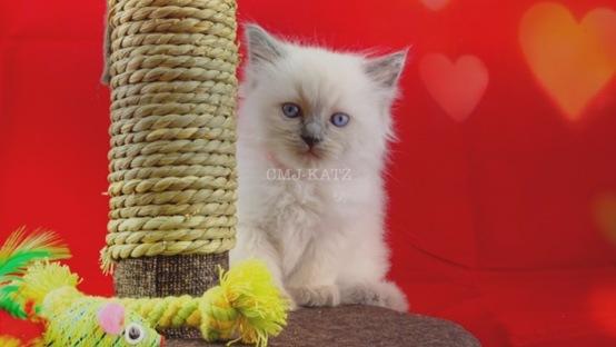 Kitten by Art Thanawat Prueksathien