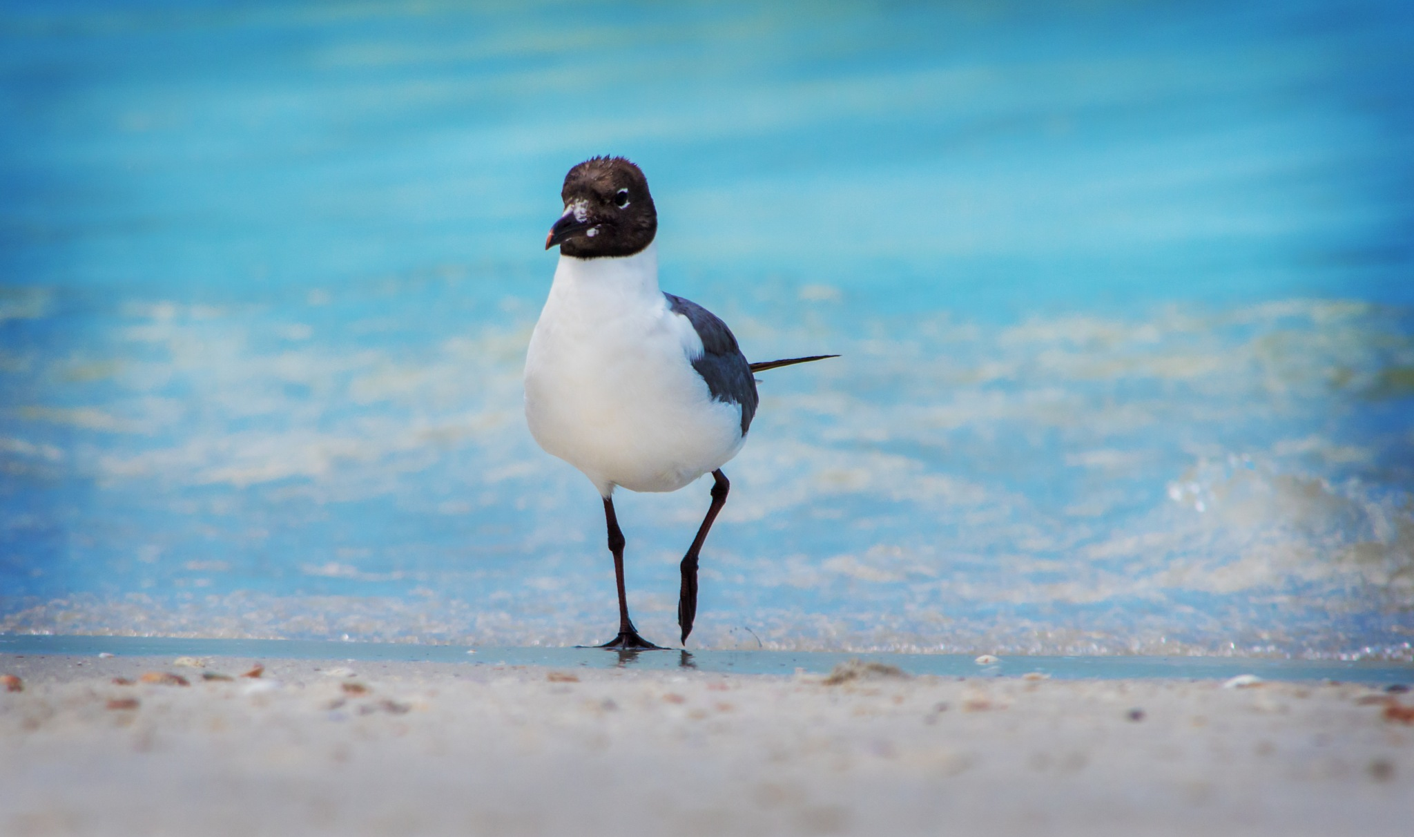 Seagull Life by Janie Best