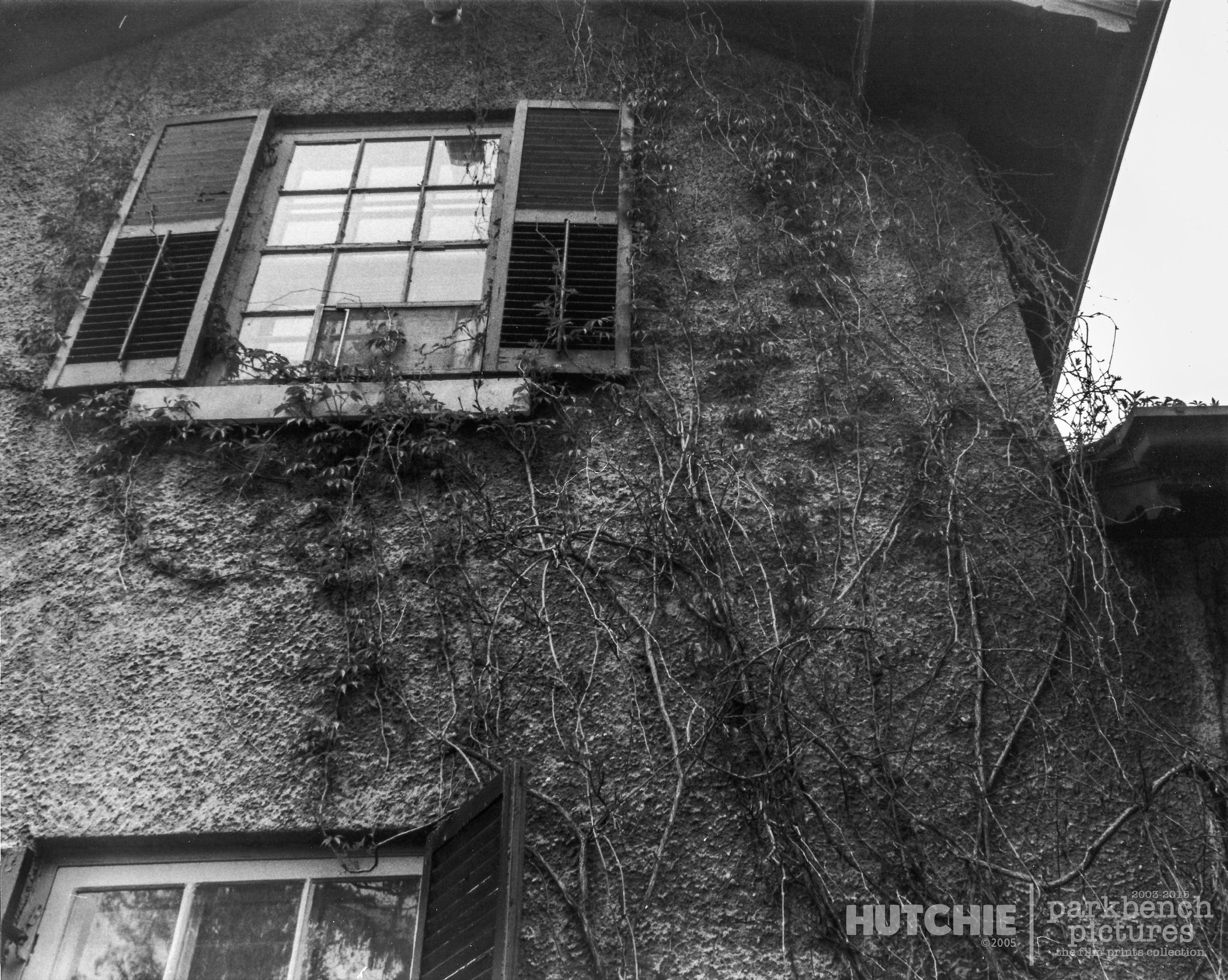 Vines by Hutchie