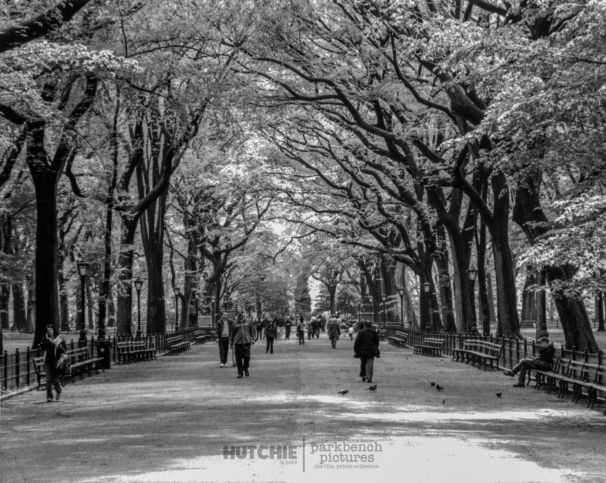Central Park in Spring by Hutchie