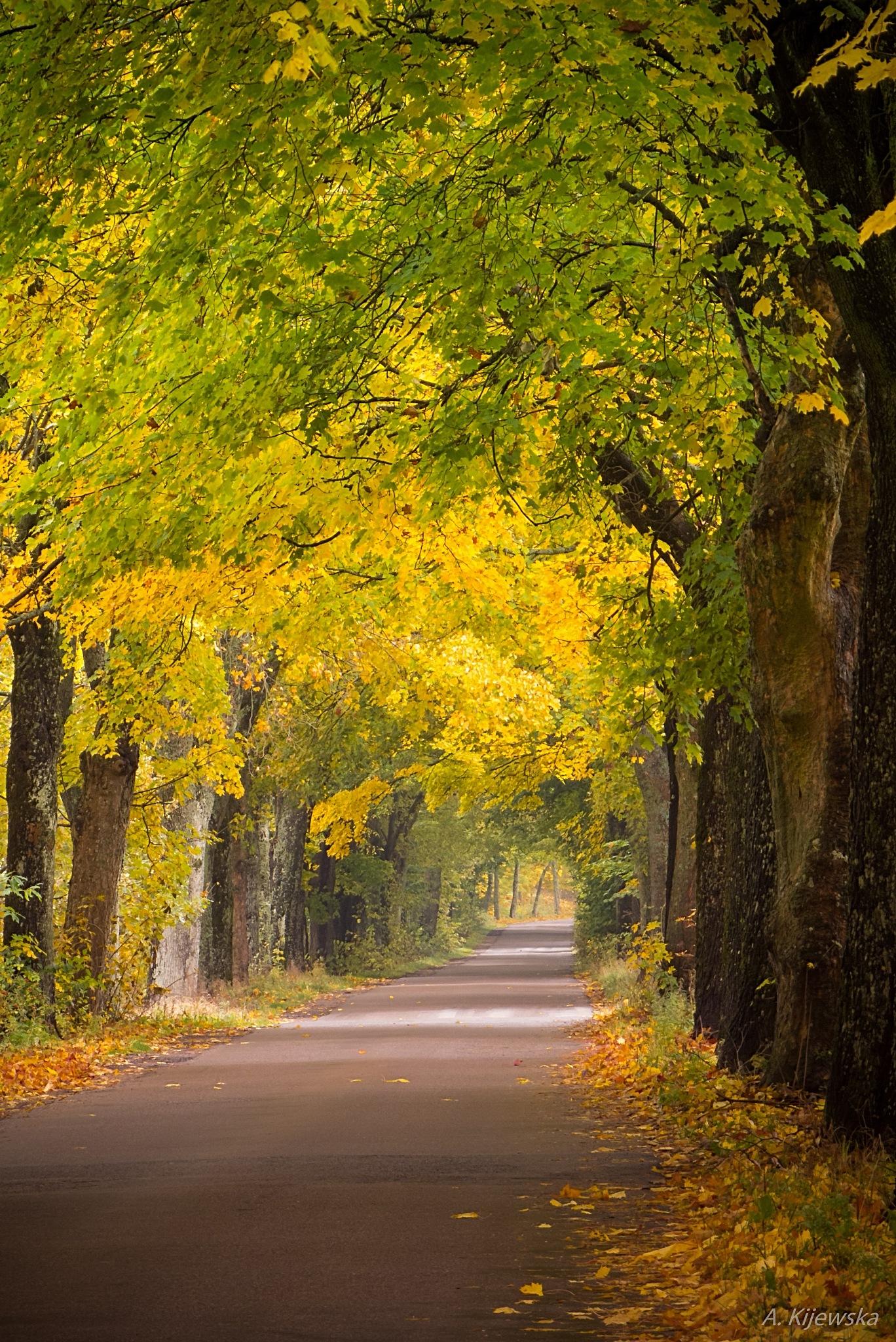 autumn ways by anisakissimplexc
