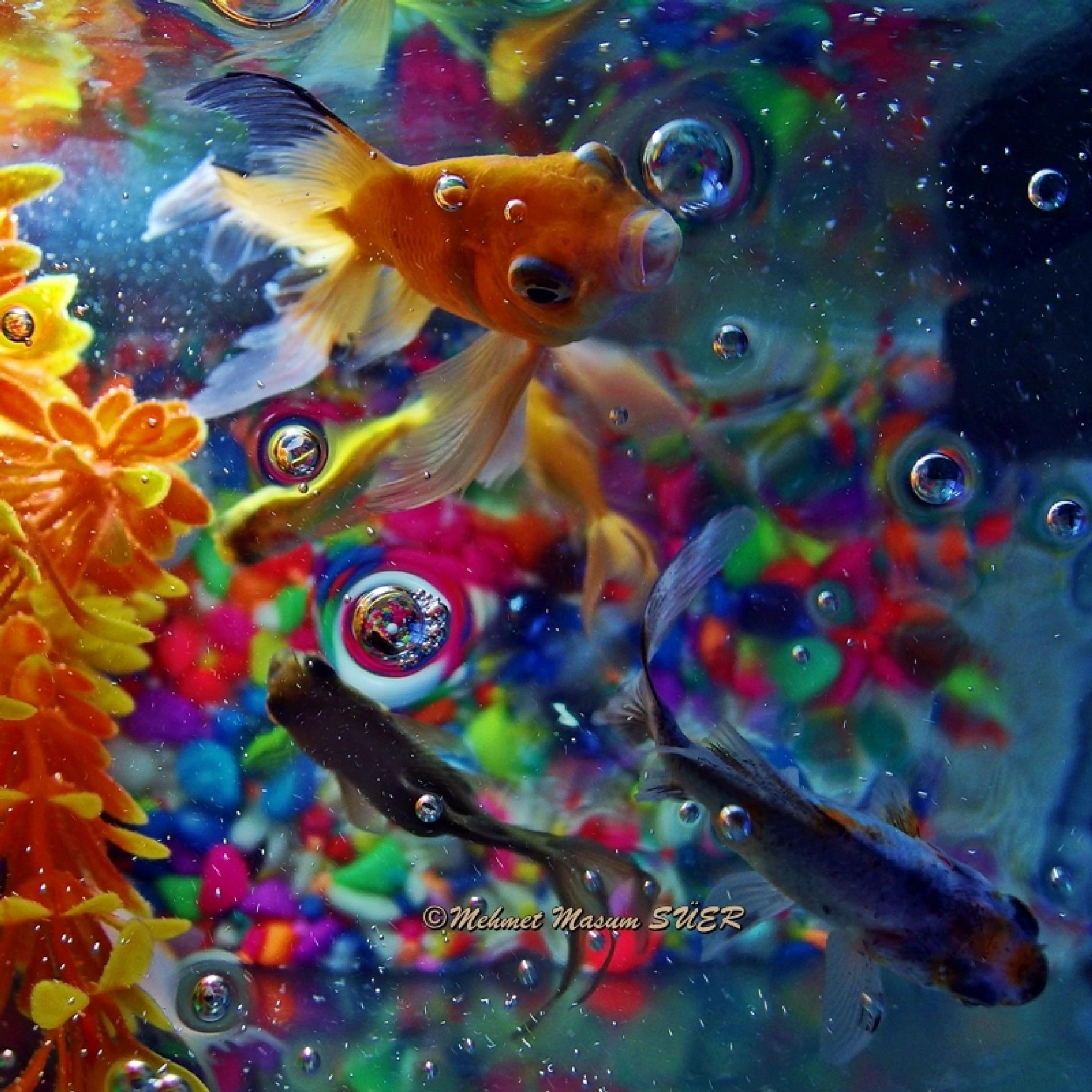 My fishes from aquarium. by Mehmet Masum SUER