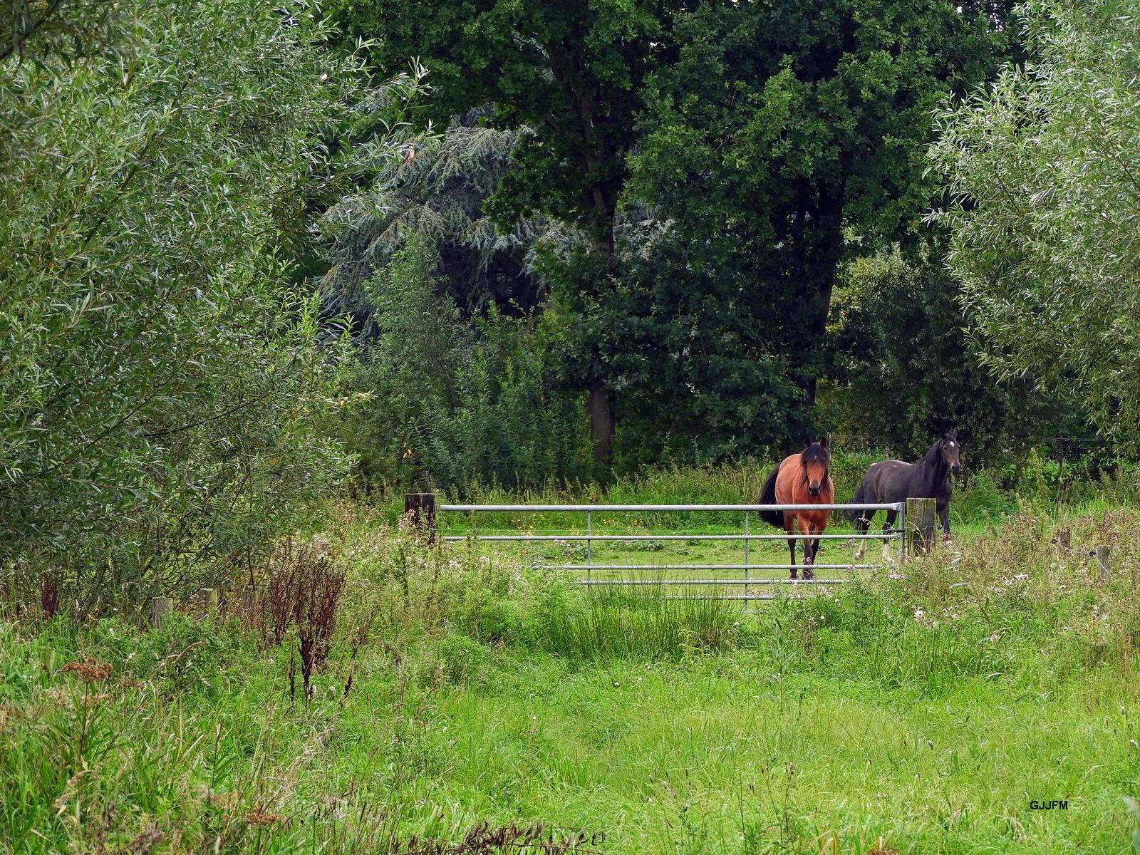 Paarden in de wei 01 by Gjjfm_M