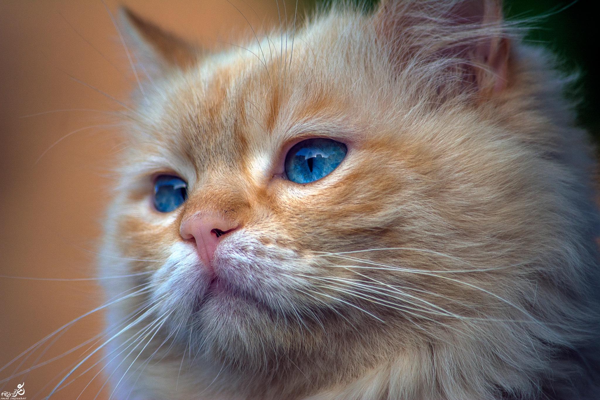 القط  by amarchekhbat17