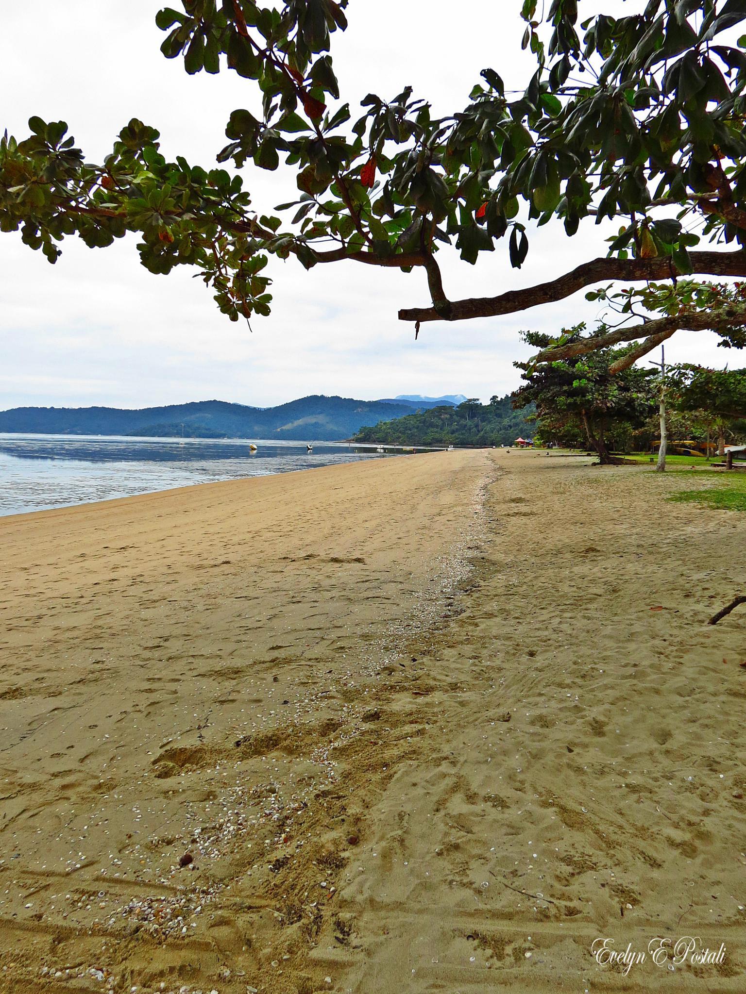 Beach by Evelyn Postali