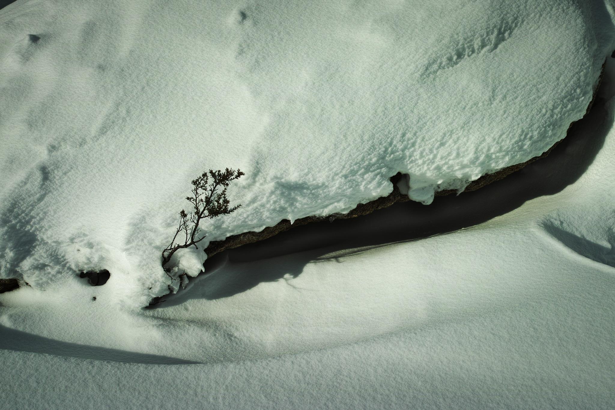 Twig 'twixt snow by TonyG