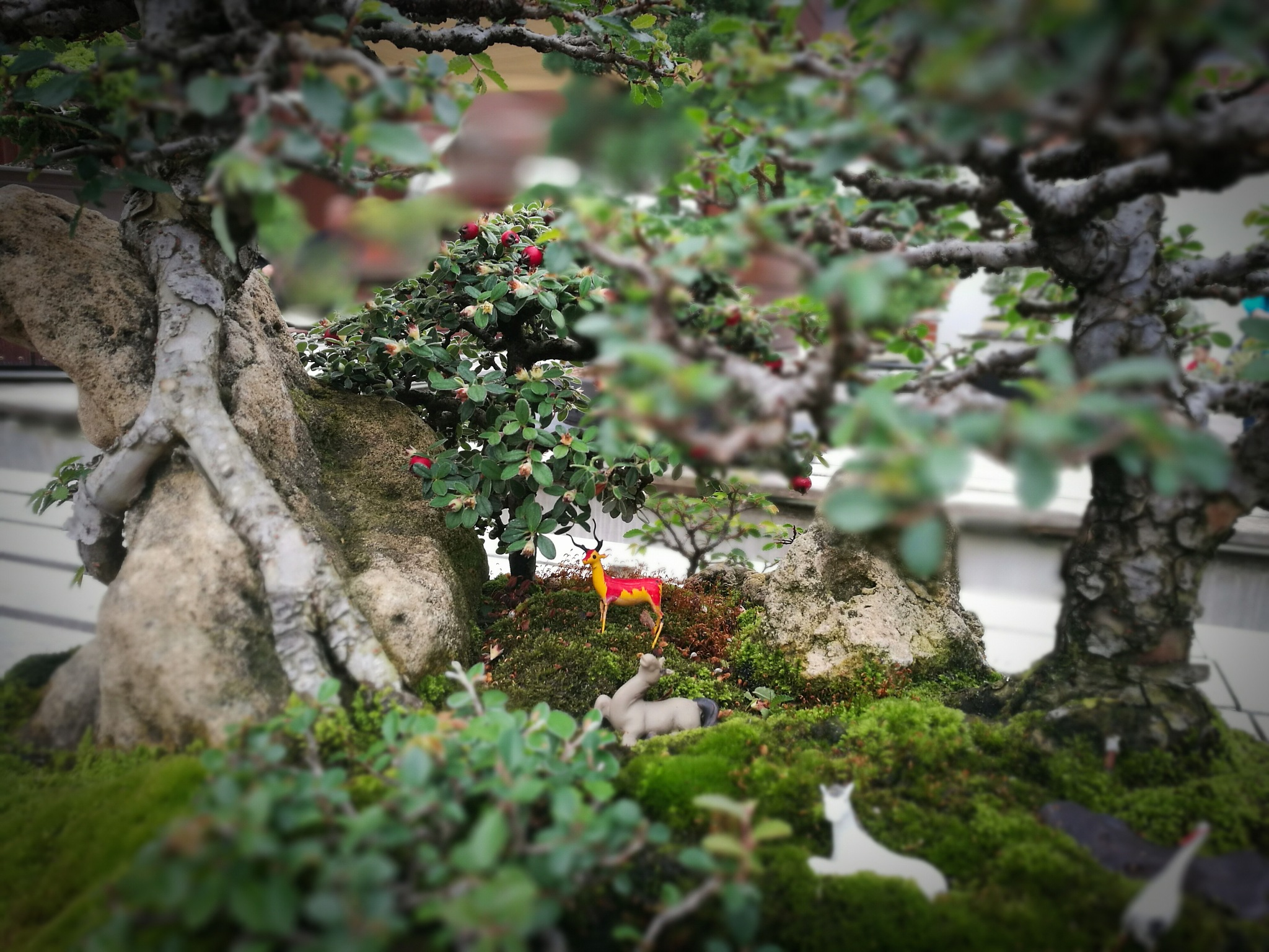 Bonsai- classic Chinese scene by TonyG