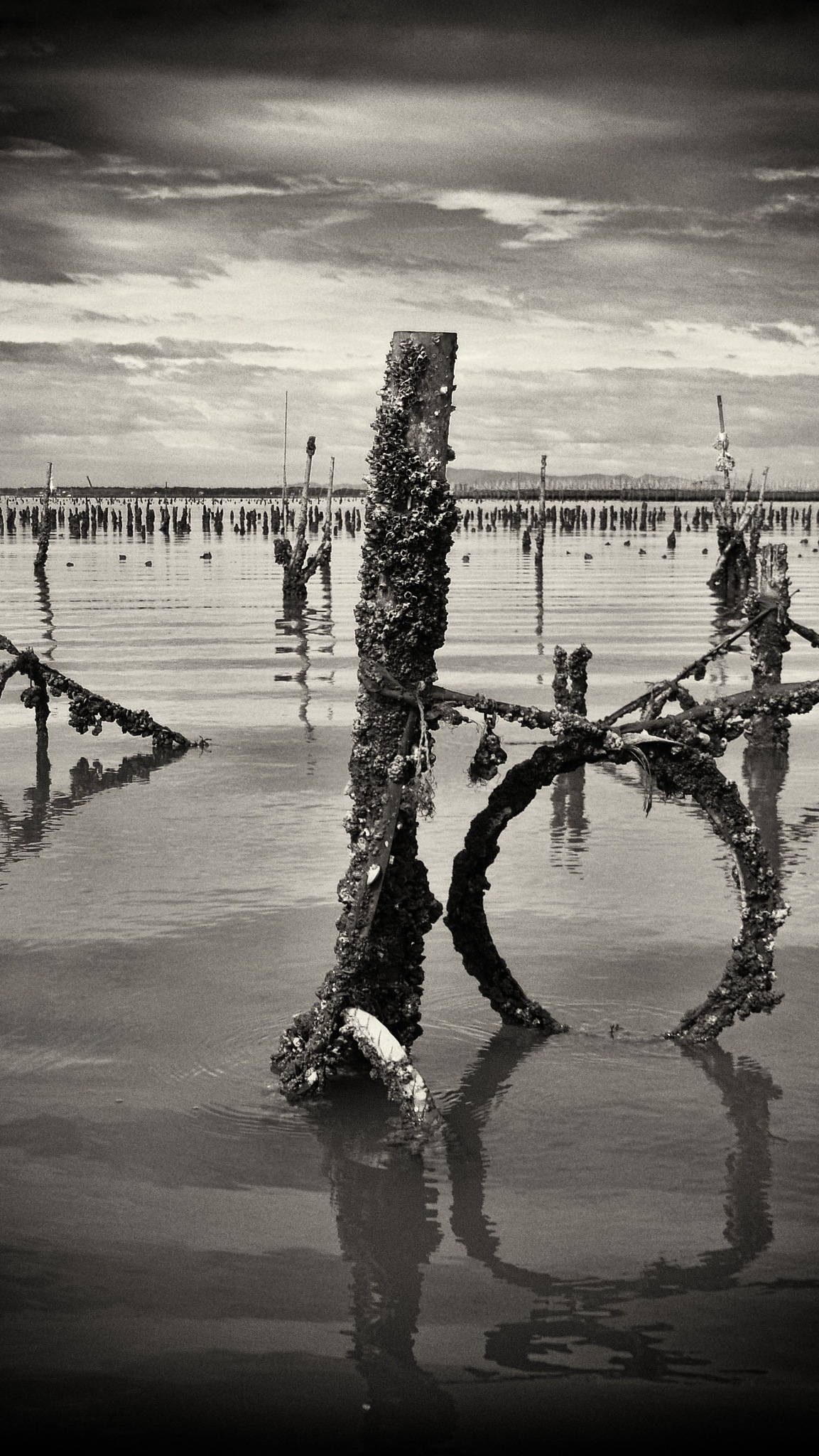 Oyster lease, Thailand by TonyG