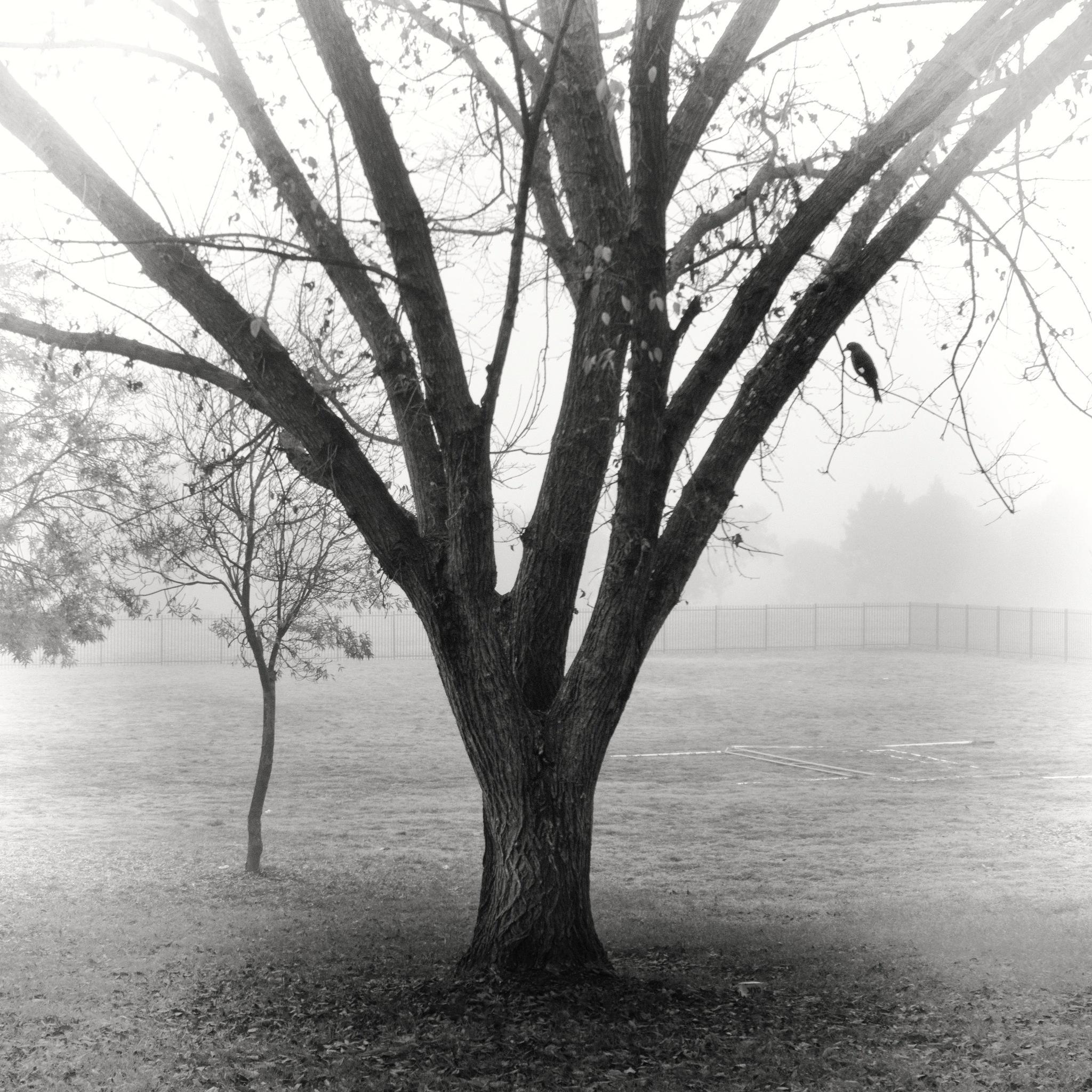 Tree at school by TonyG