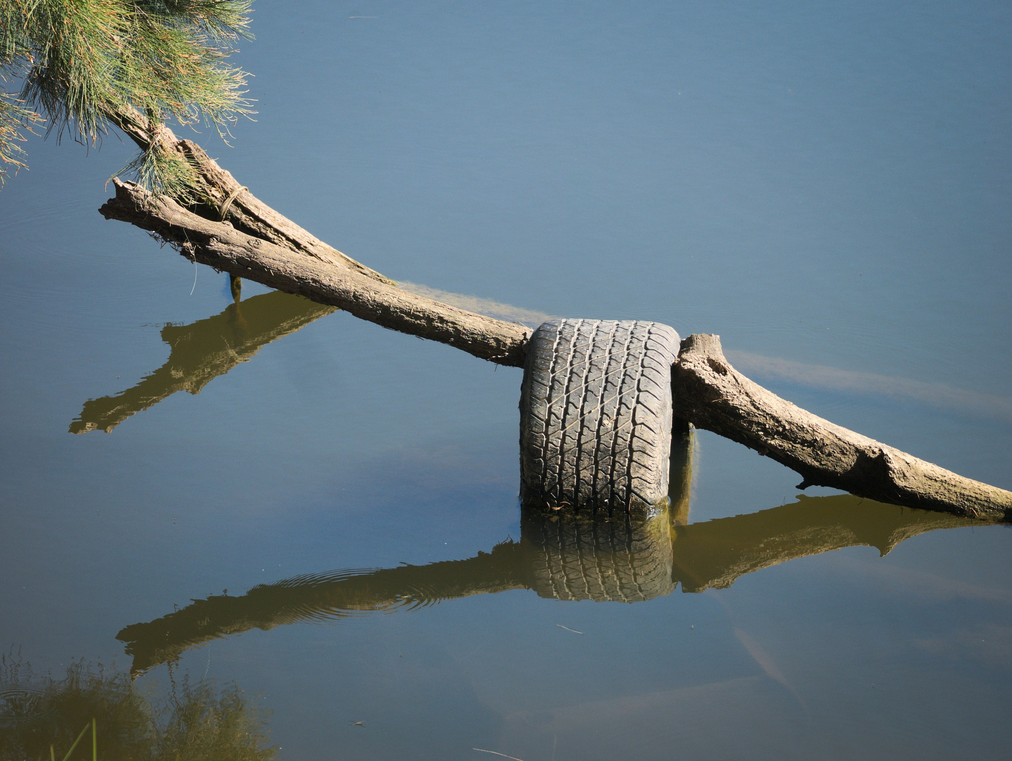 Nature's tyre rack by TonyG
