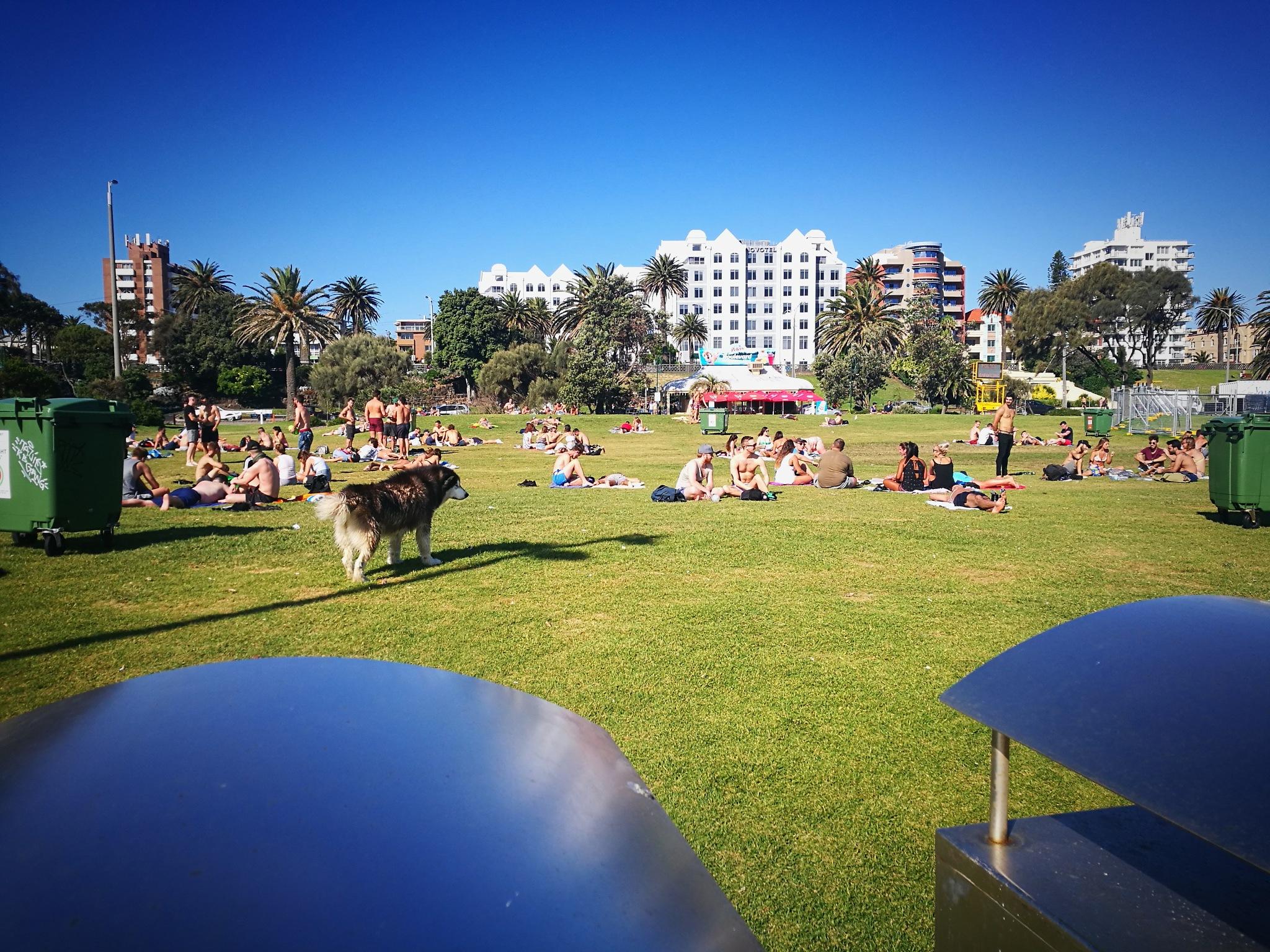 St Kilda Park by TonyG