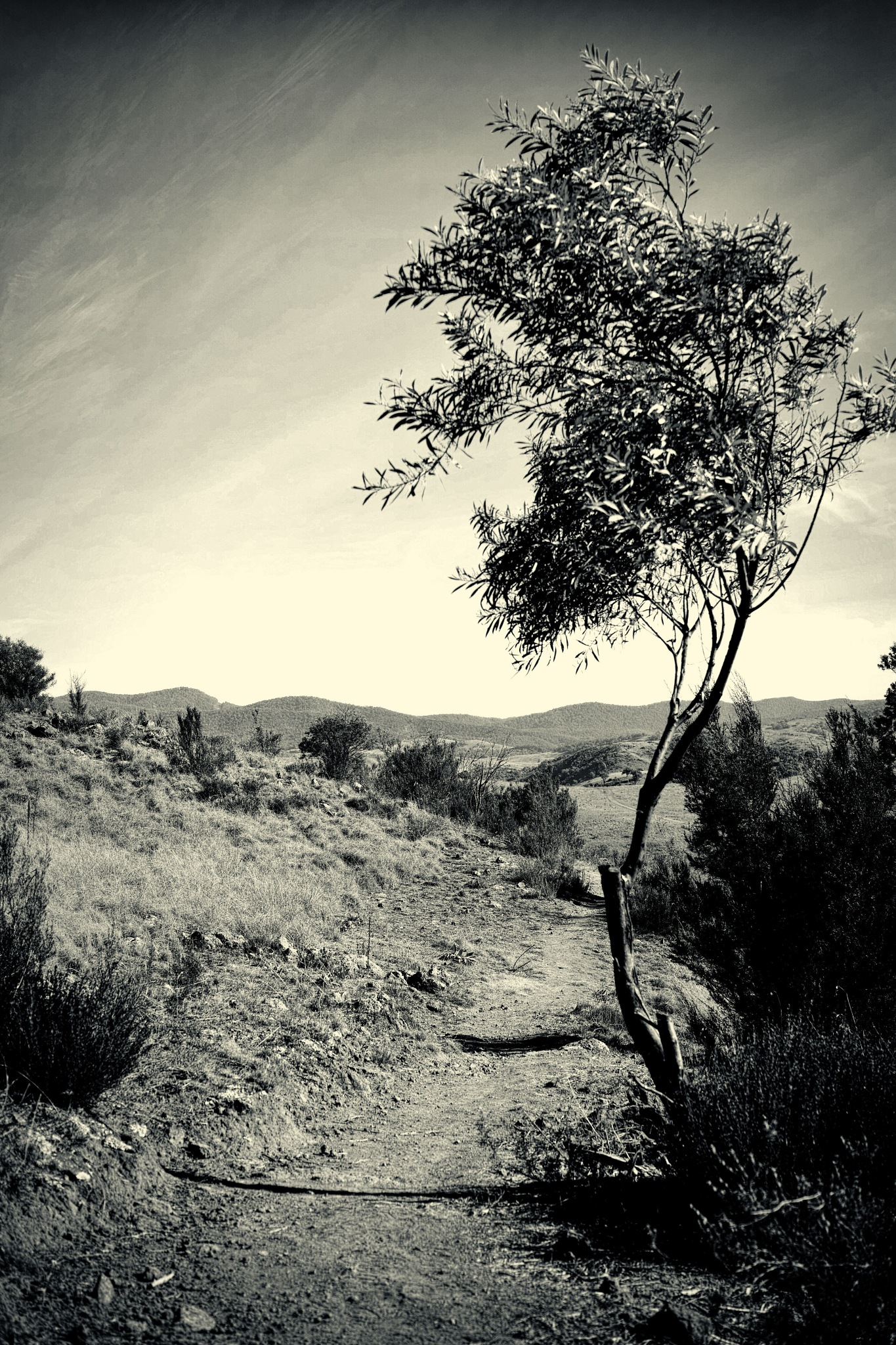 The tree on the path by TonyG