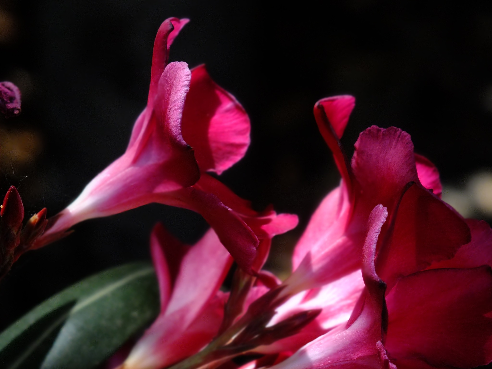 flower by Lee piercy photography