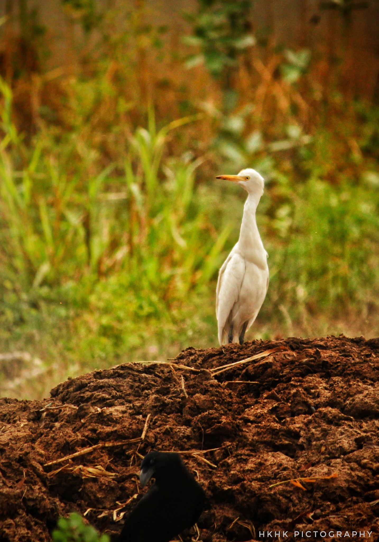 bird by Hari Khk