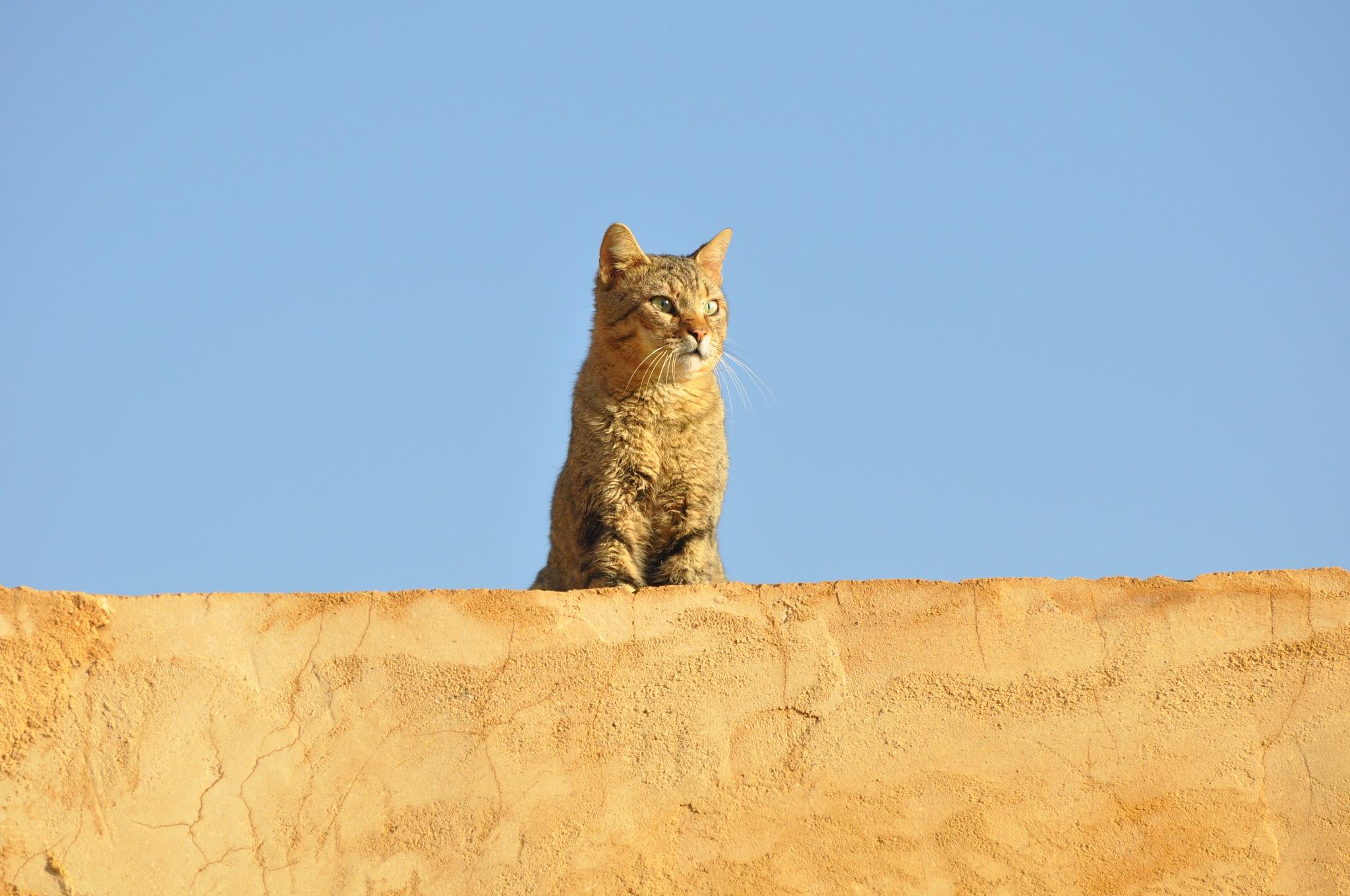 #CAT by Saber Omran