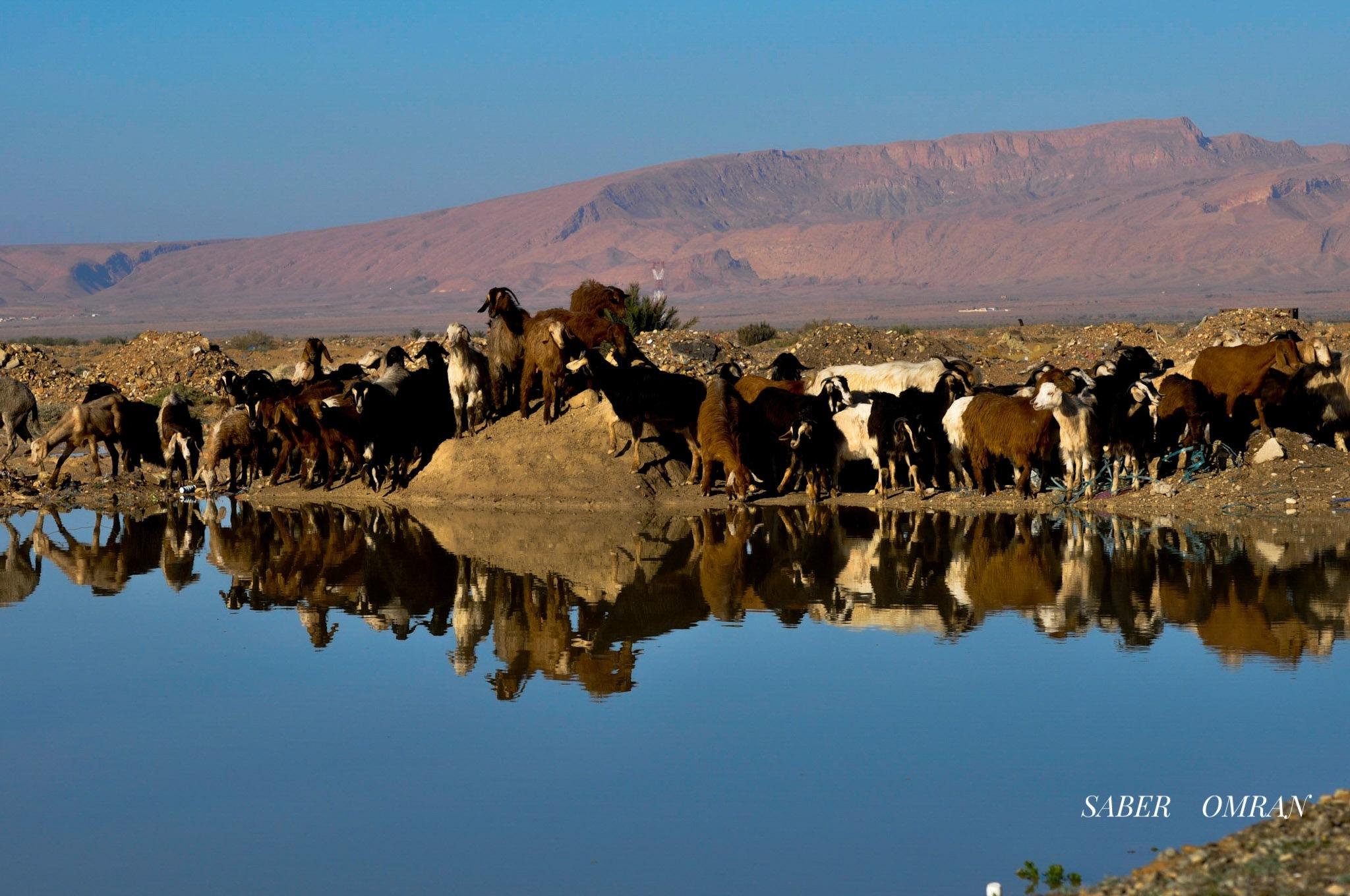 Untitled by Saber Omran