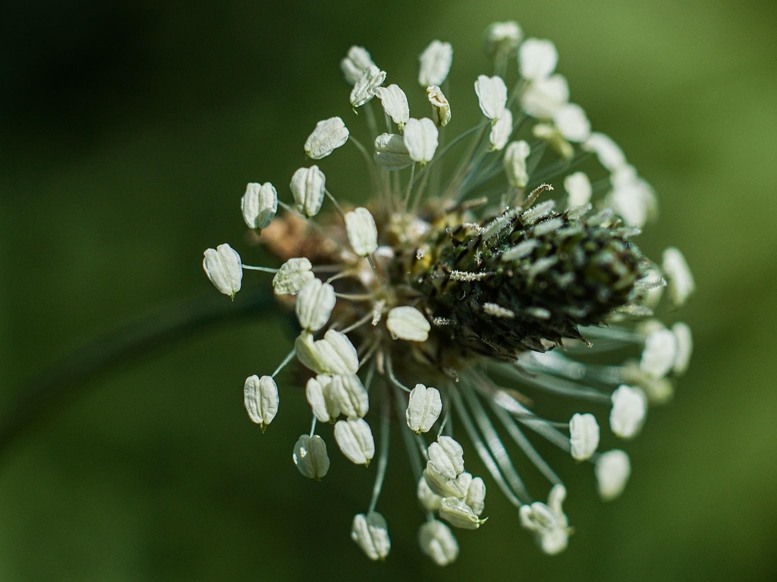 On a meadow 2 by Jan Kliner
