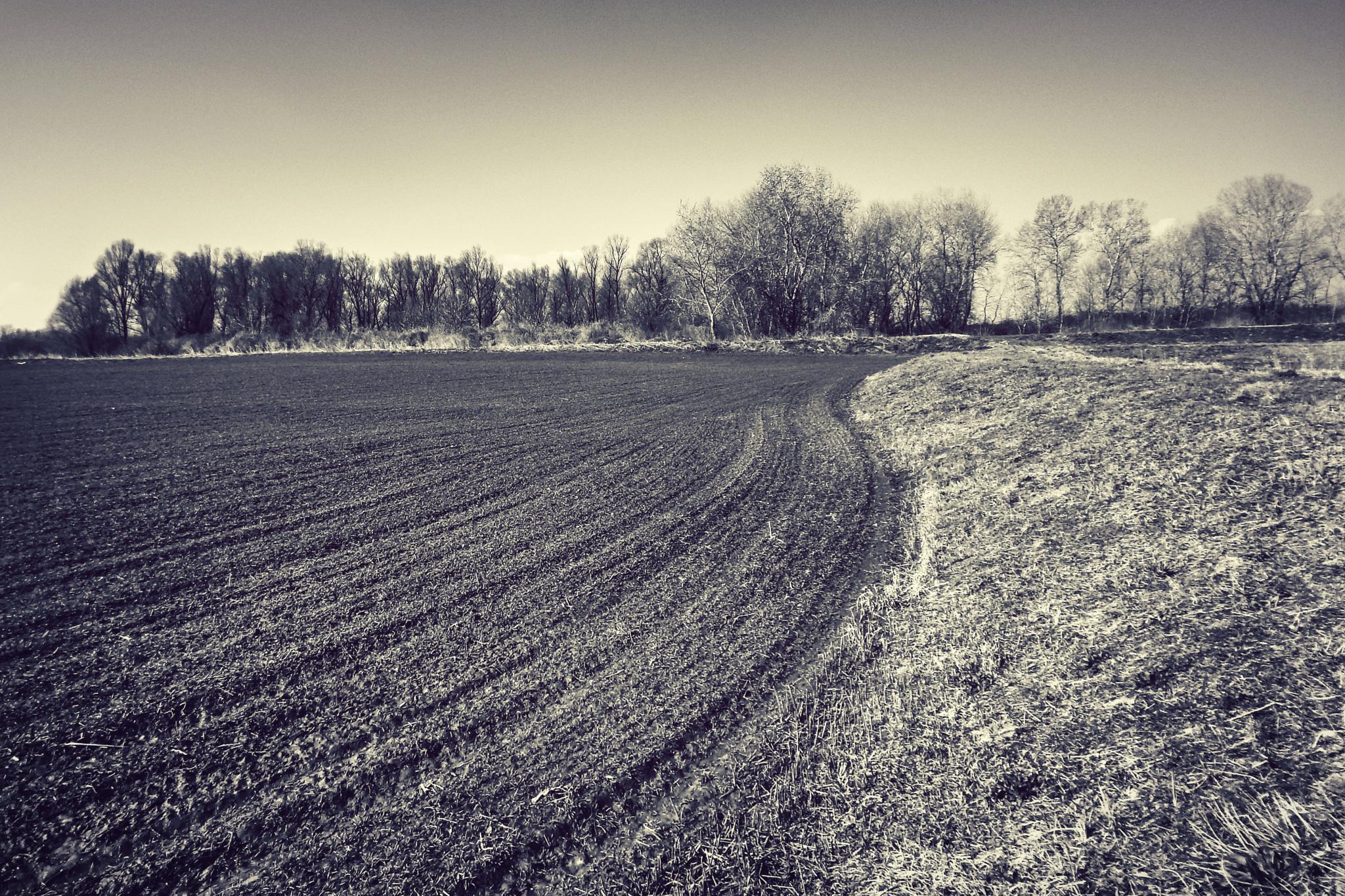 black field by Nenad Milic