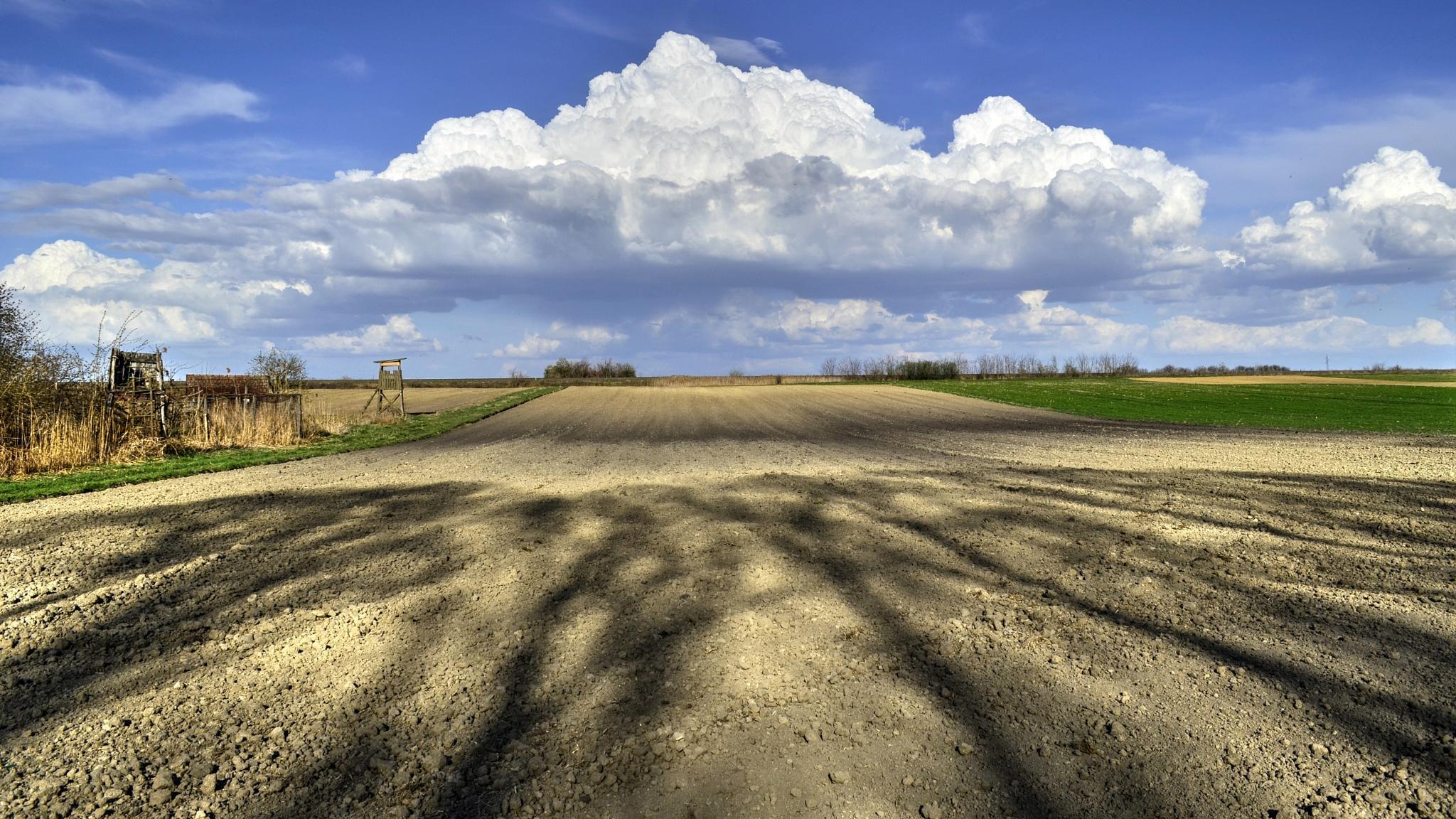 fields in baranja by Nenad Milic